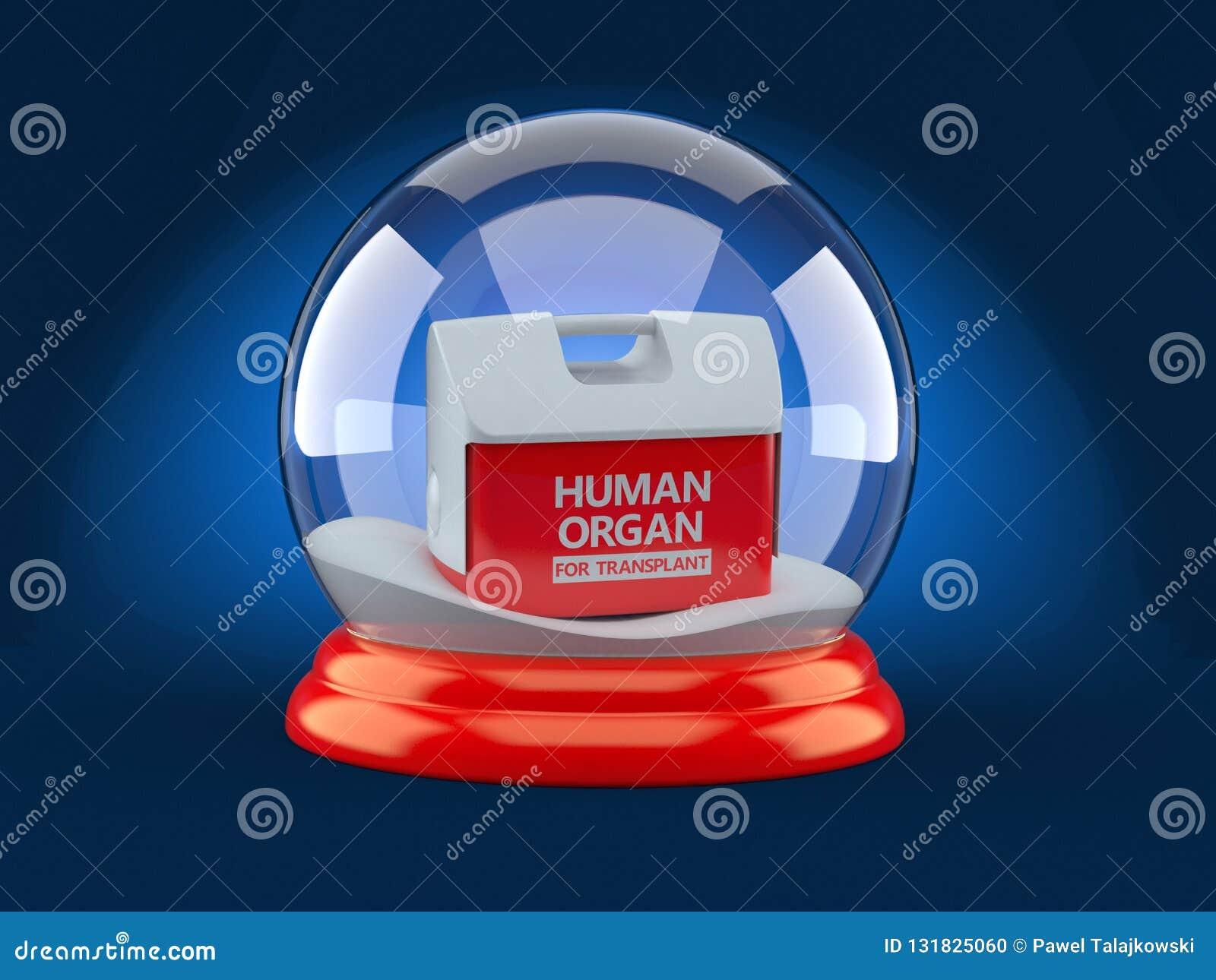 Refrigerador para el órgano humano dentro de la bola de vidrio de la Navidad