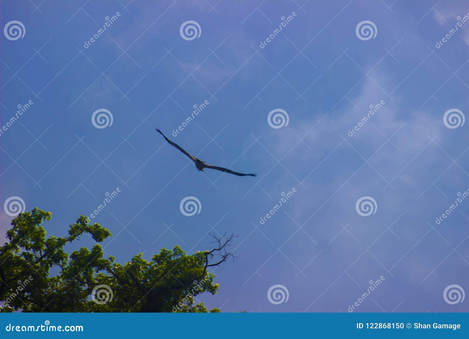 Refugio de aves Sri Lanka de Attidiya