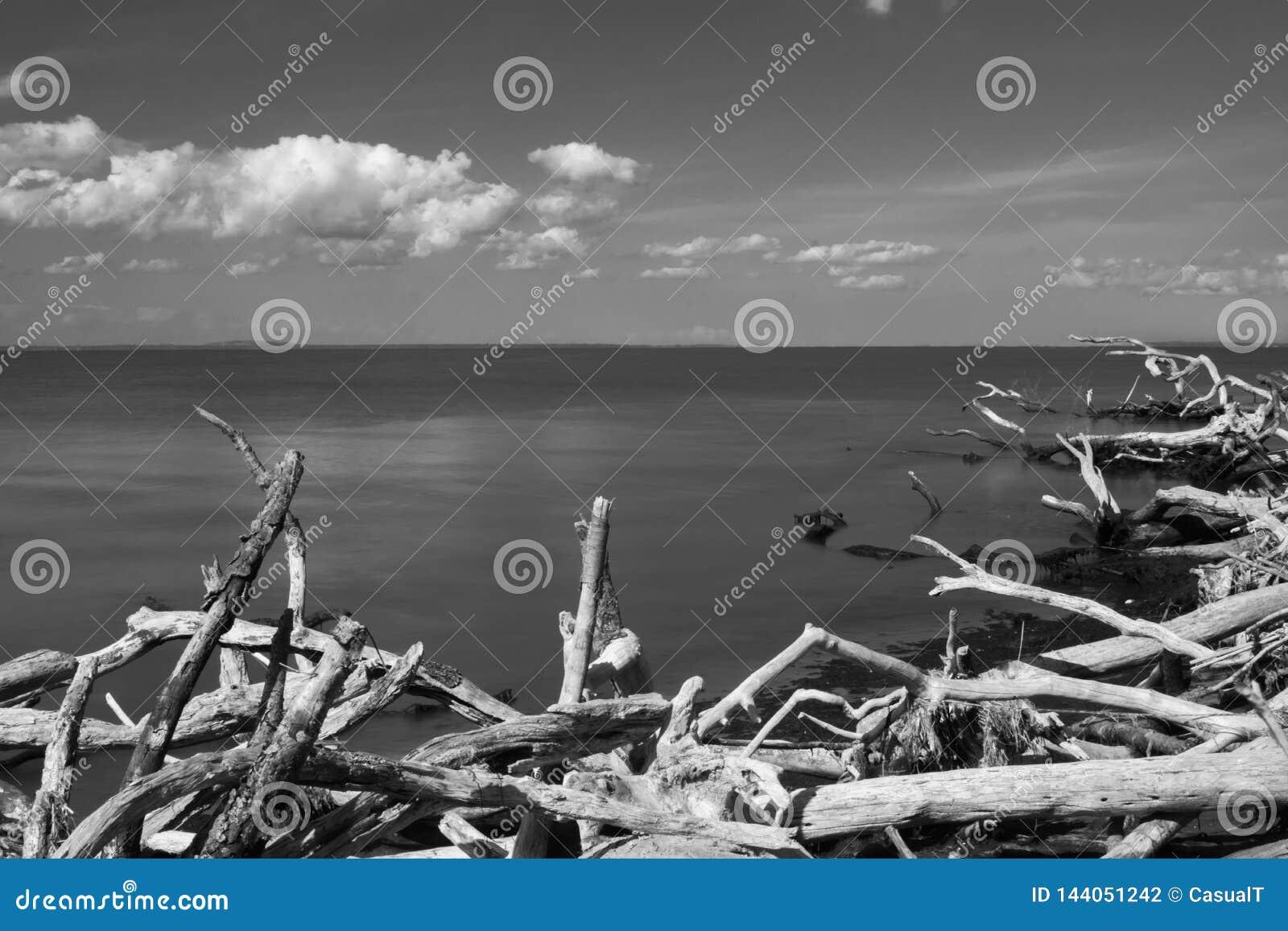 Regardant du sud à travers l Océan Atlantique, vers l horizon avec le bois de flottage dans le premier plan, dans noir et blanc,