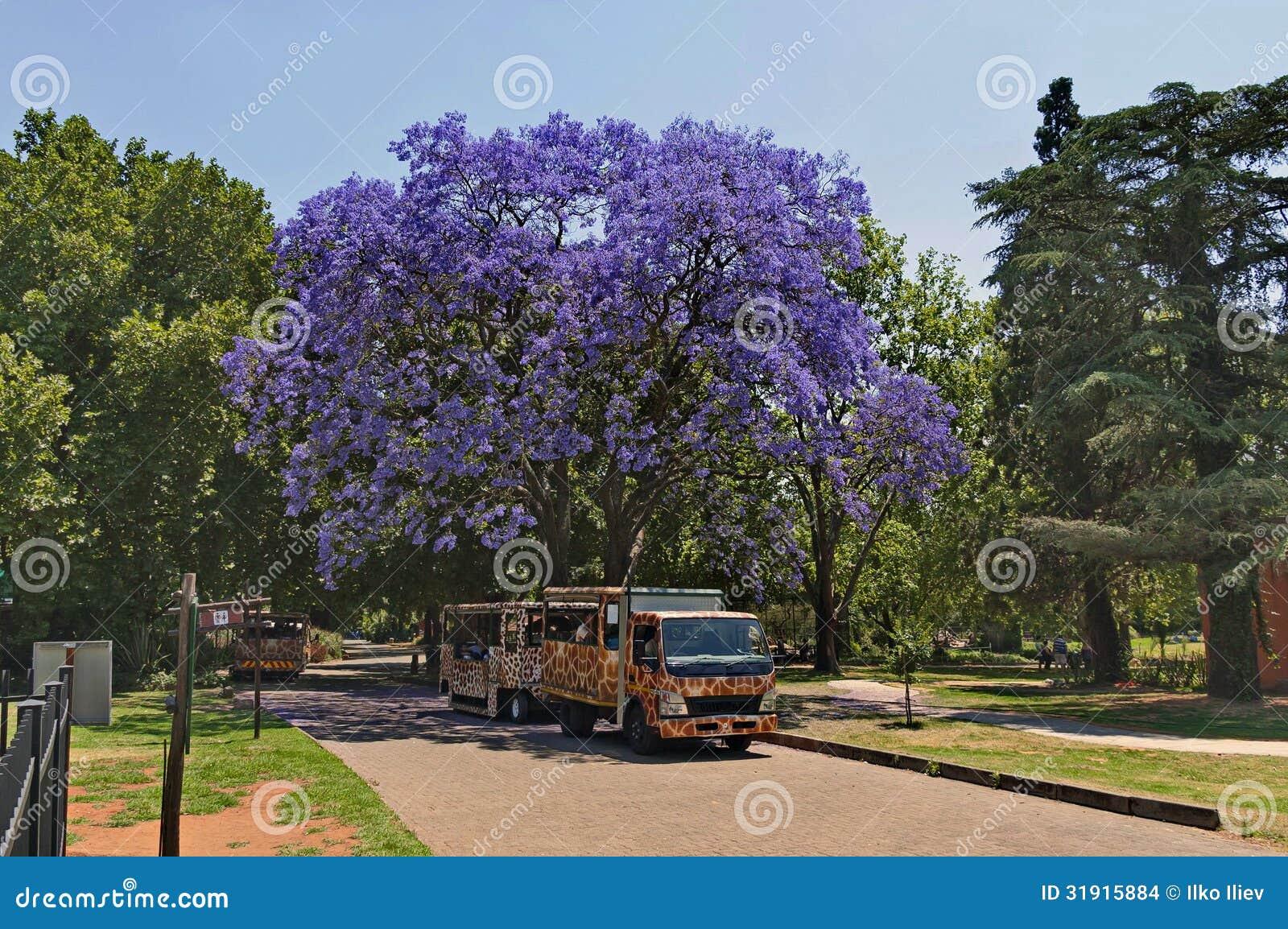 Regardez du zoo de Johannesburg, Afrique du Sud