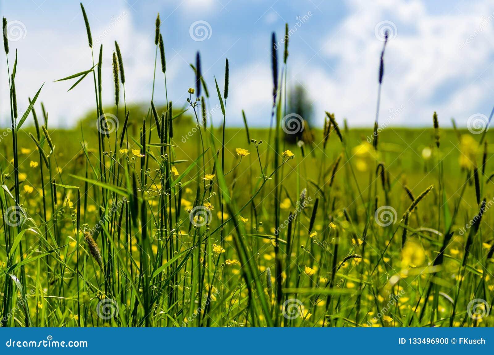Regardez par des lames de l herbe au-dessus d un pré, ciel à l arrière-plan, foyer sélectif