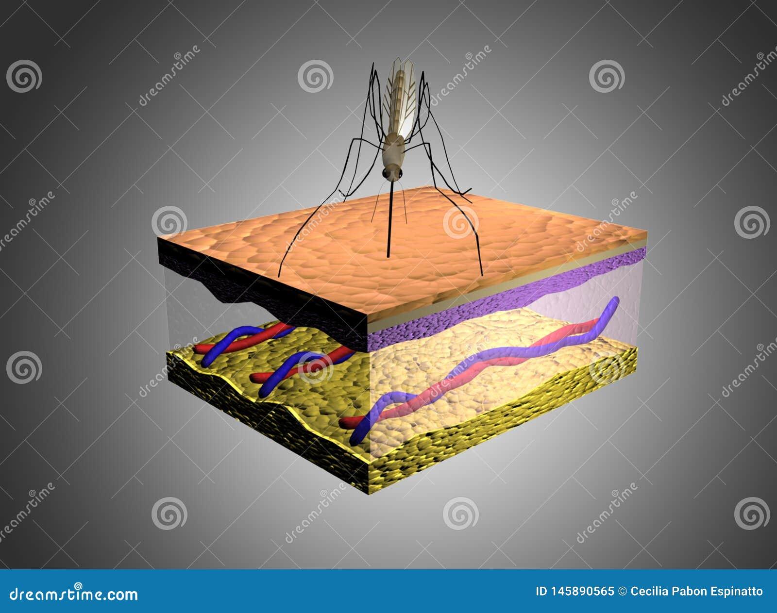 Regeling van mugbeet in menselijke huid