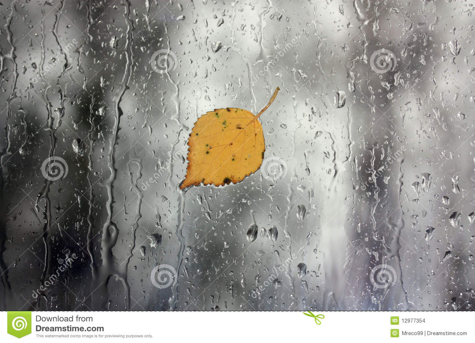 Regen auf fenster mit blatt stockbilder bild 12977354 - Download er finestra ...