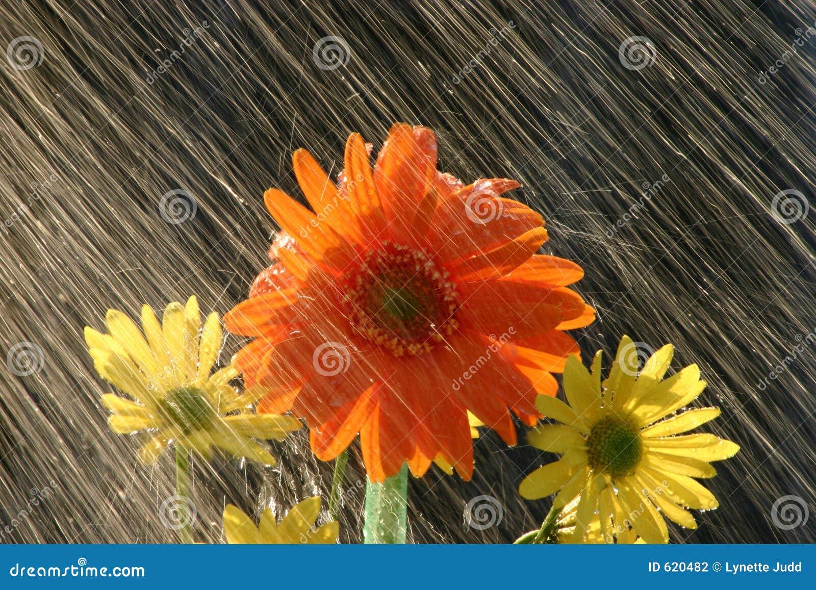 Regen op Bloemen