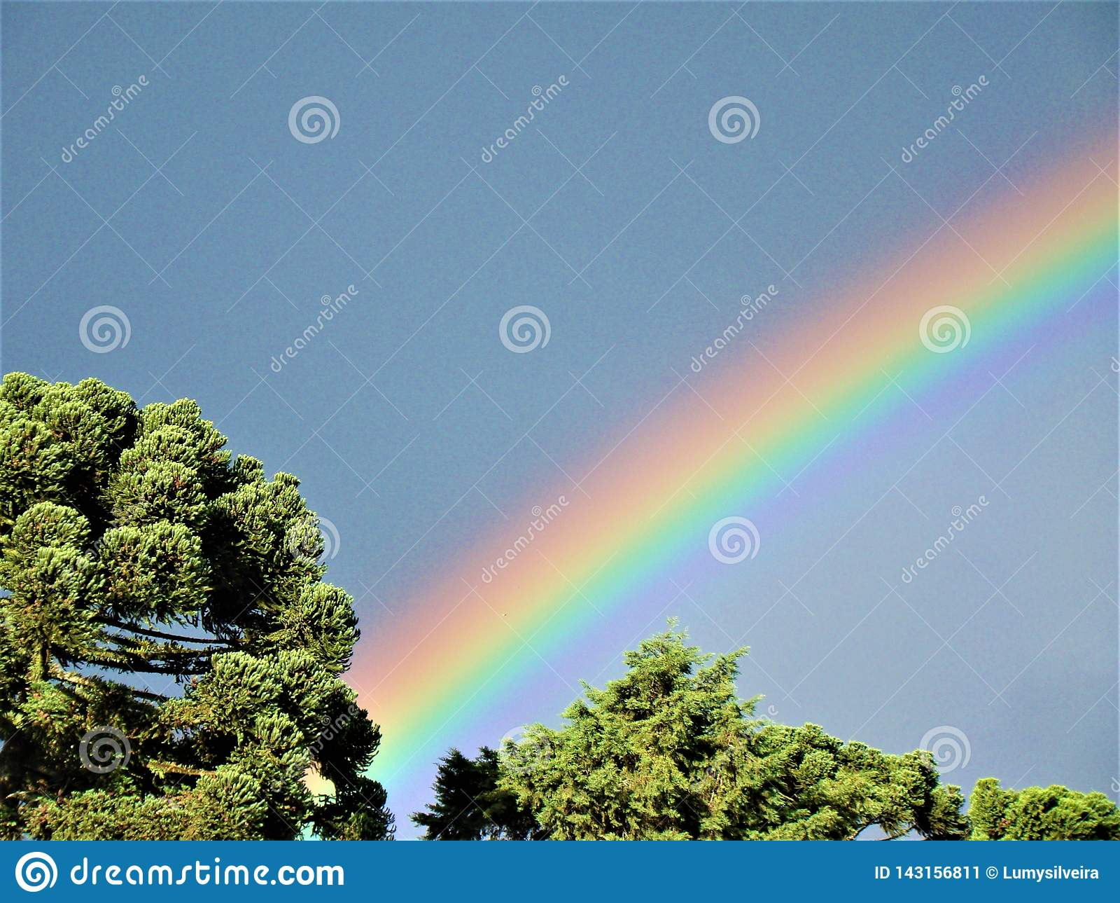 Regenbogen über Araukarienkiefern in Brasilien