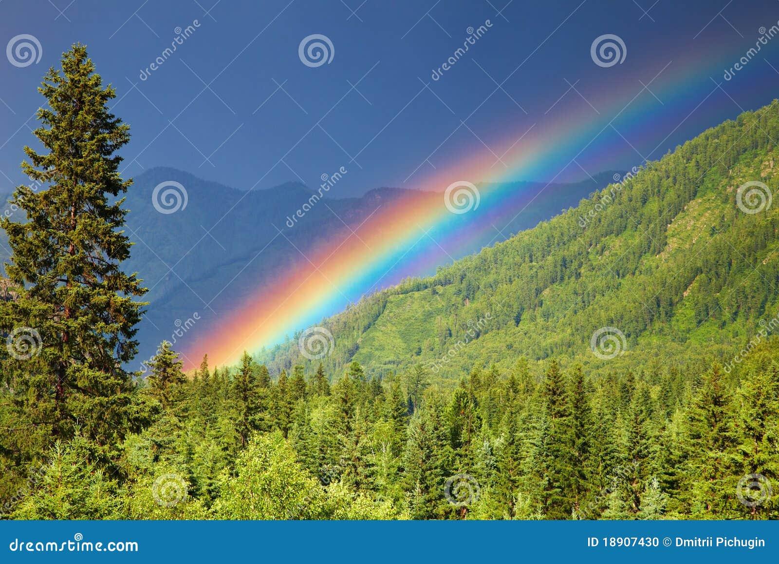 Regenbogen über Wald