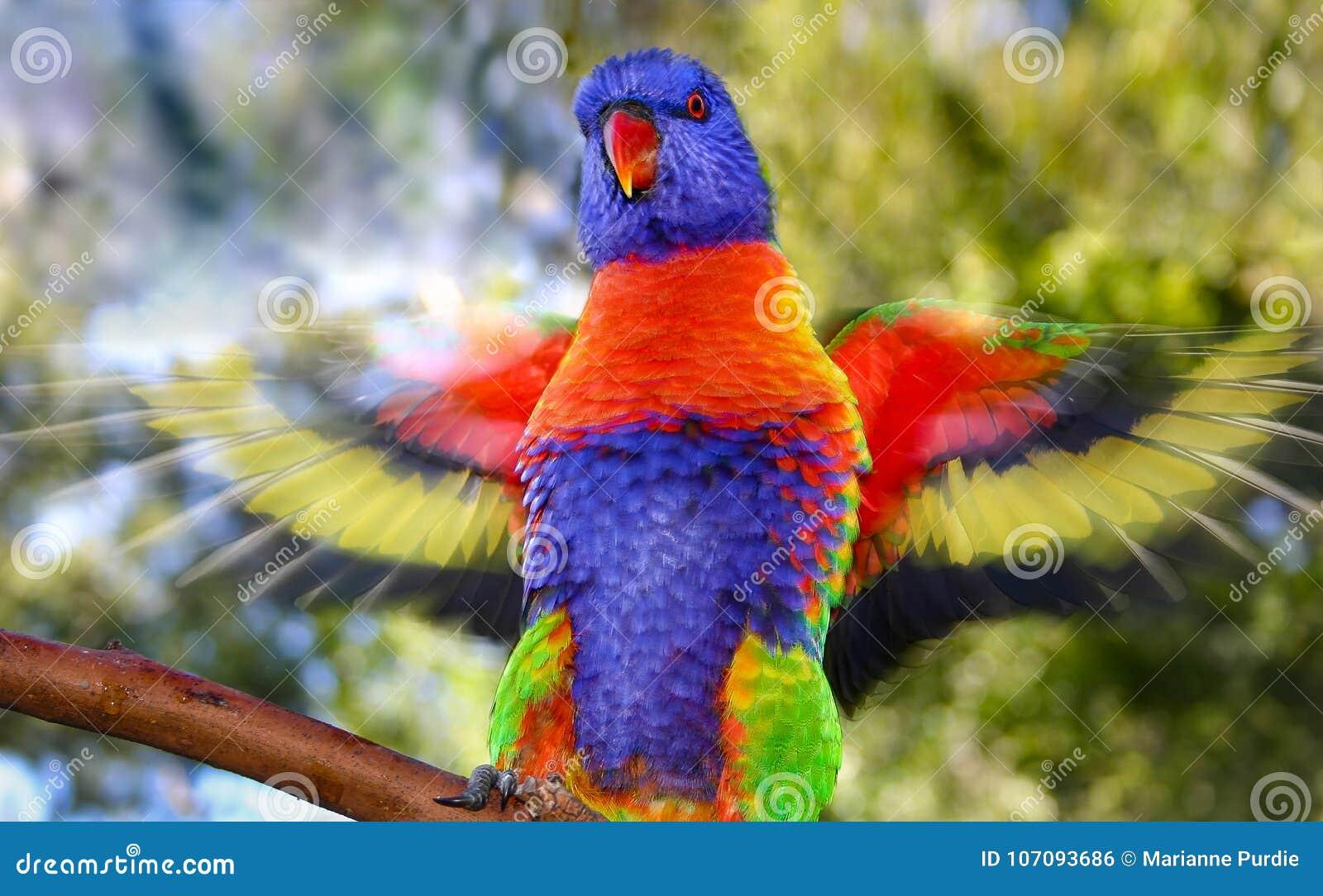 Regenboog die lorikeet zijn vleugels klappen die motieonduidelijk beeld tonen