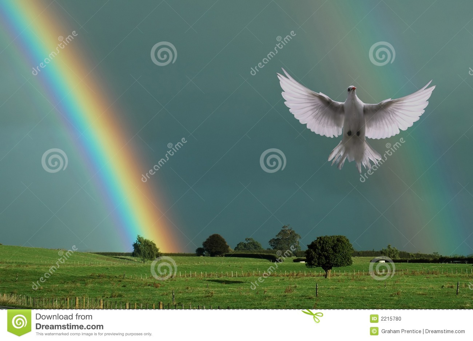 Regenboog en de Duif