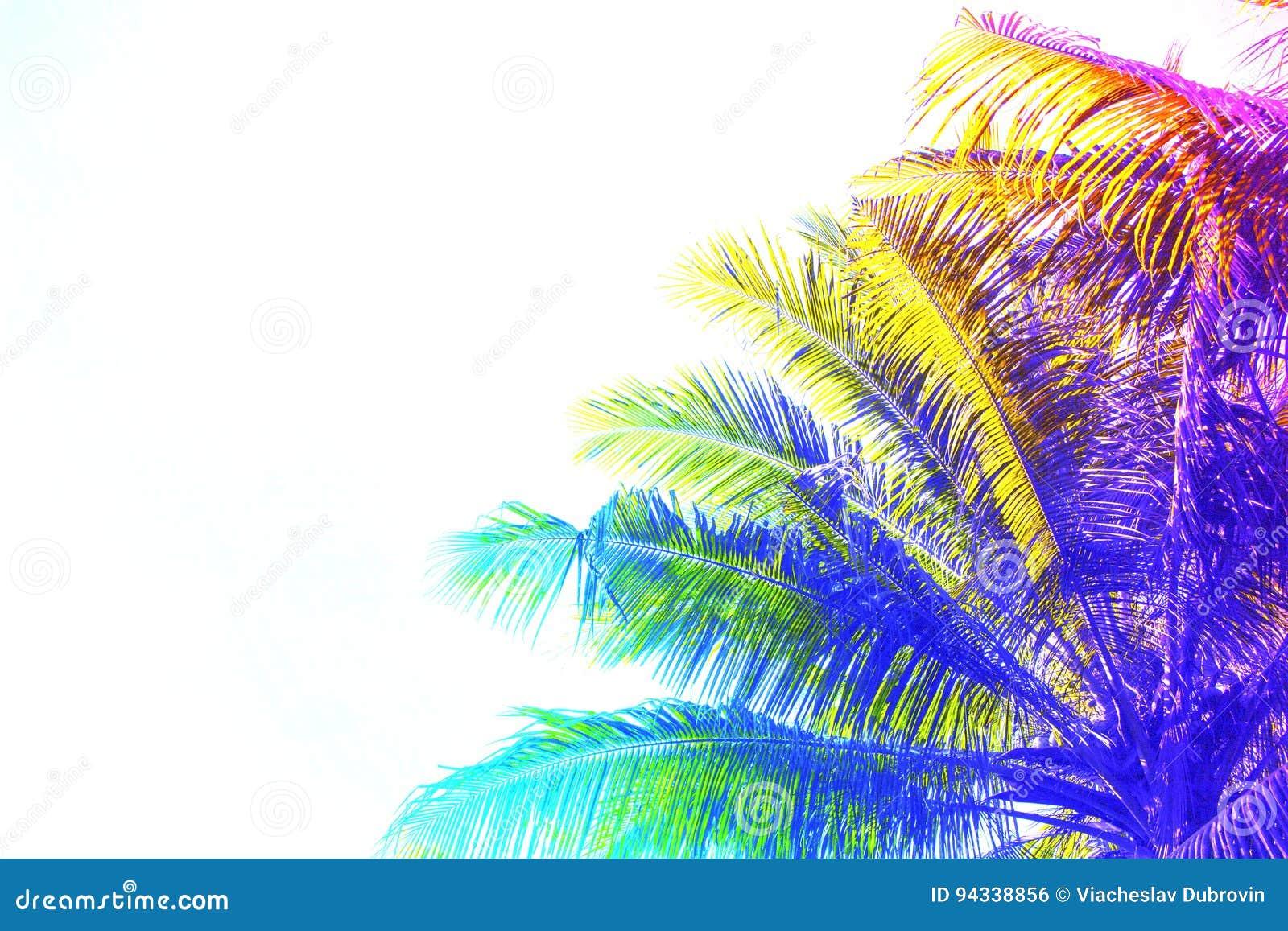 Regenboog gekleurde palmkroon op hemelachtergrond Fantastische gestemde foto met cocopalm op wit