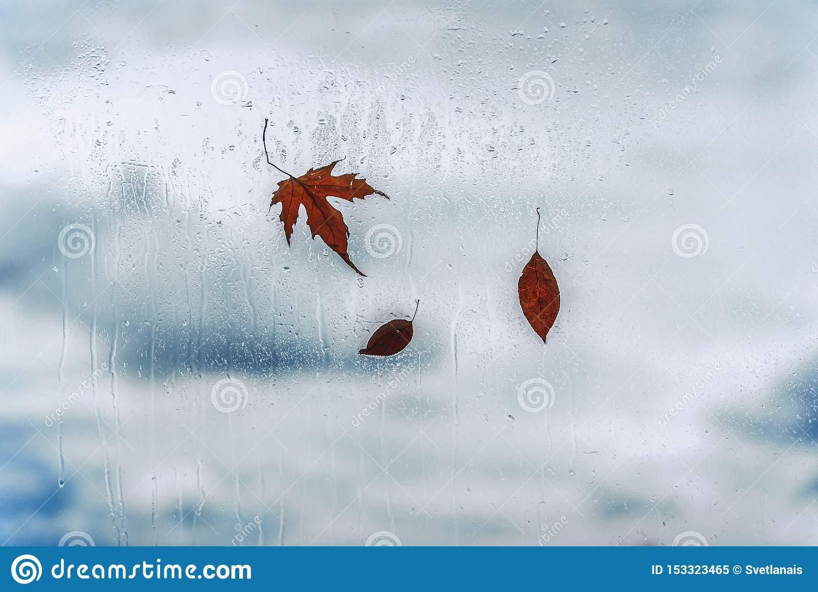 Regendalingen op nat venster en gevallen bladeren erachter Concept regenachtig weer, dalingsseizoenen abstracte achtergrond