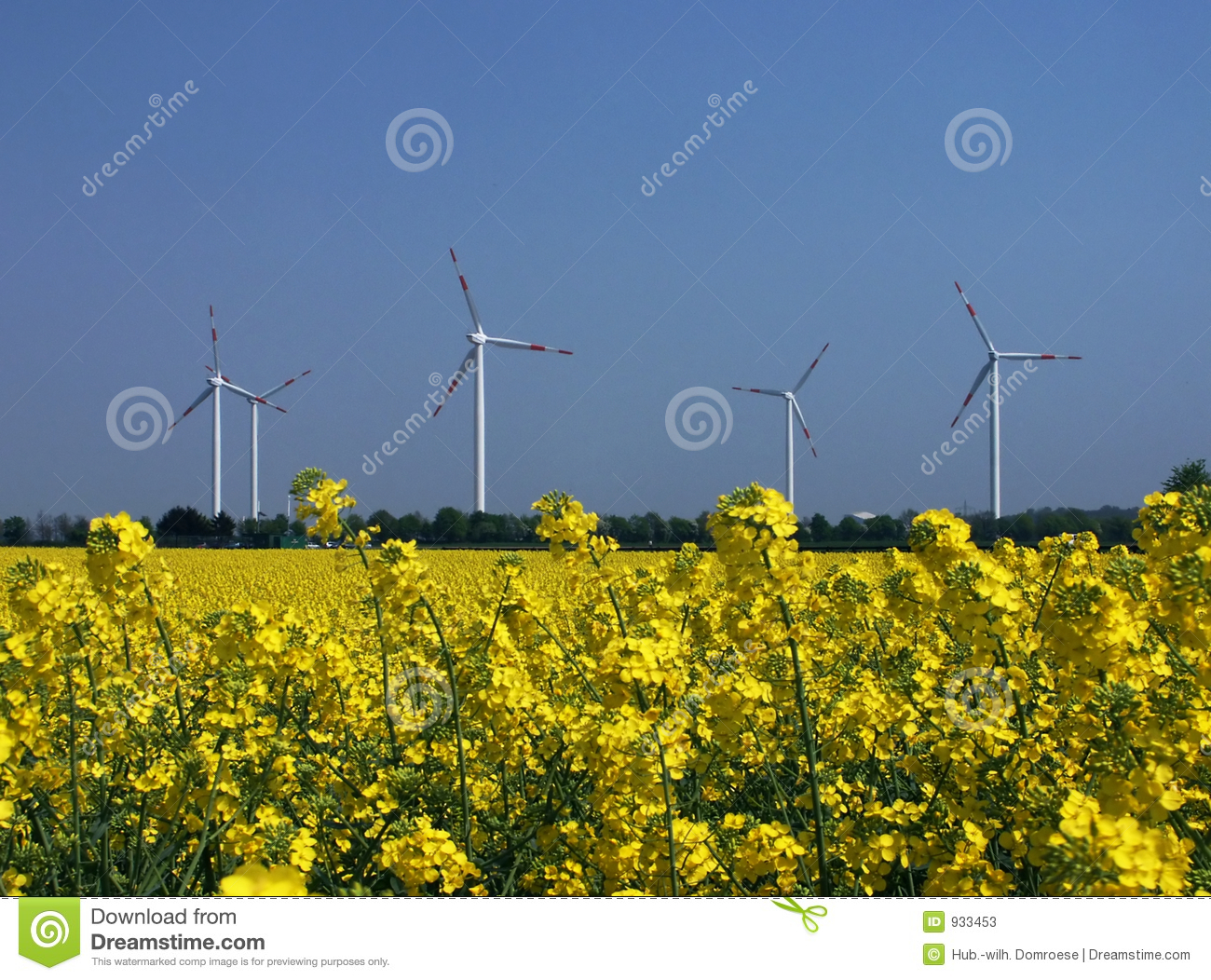 Regenerative energy sources, colza and wind