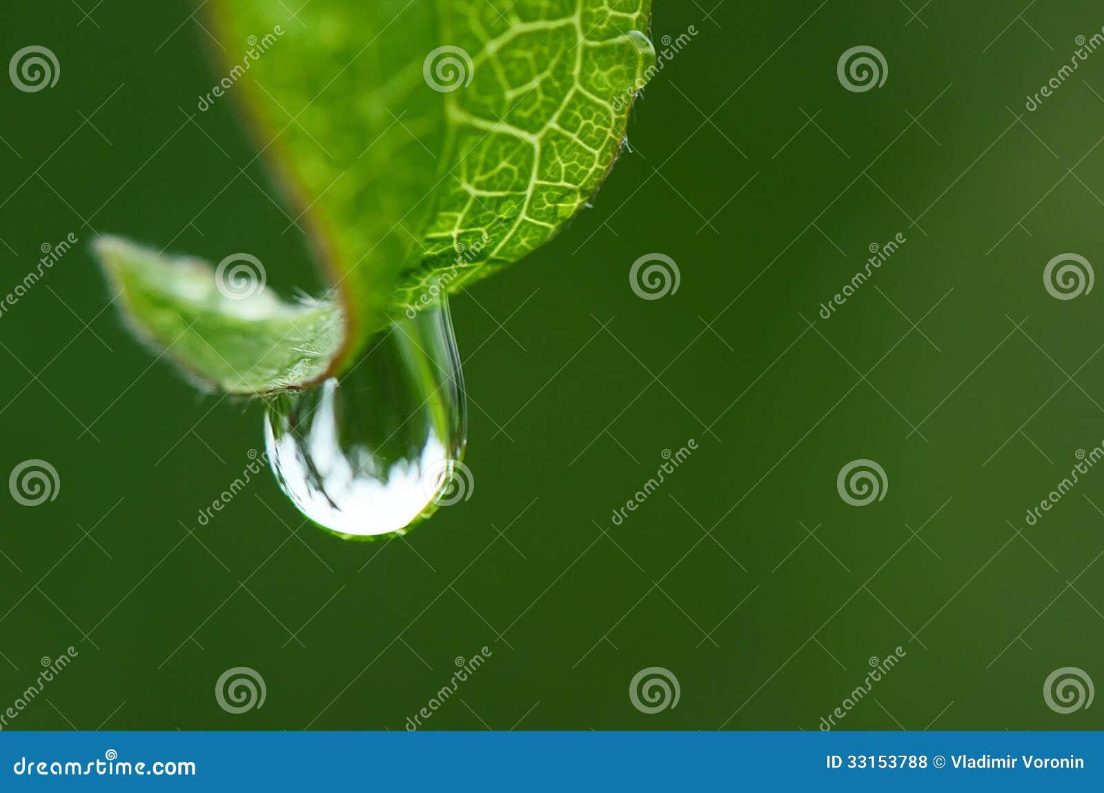 Regentropfen auf einem Blatt