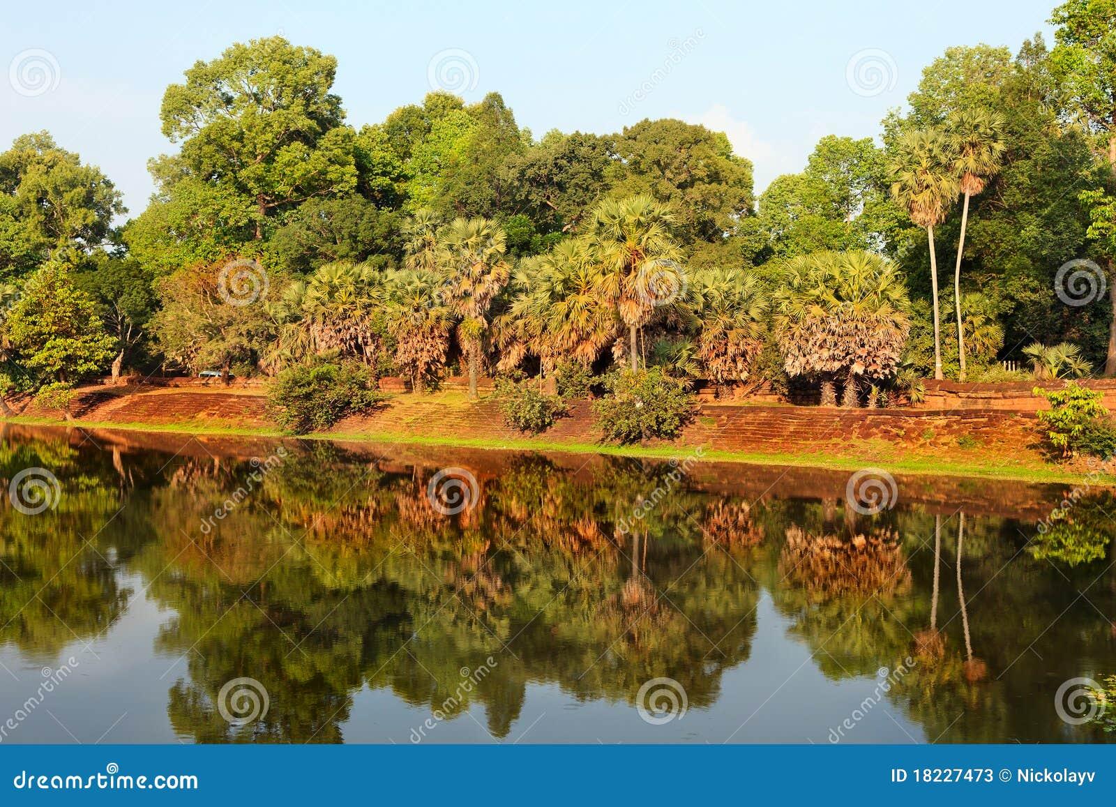 Regenwald widergespiegelt im See