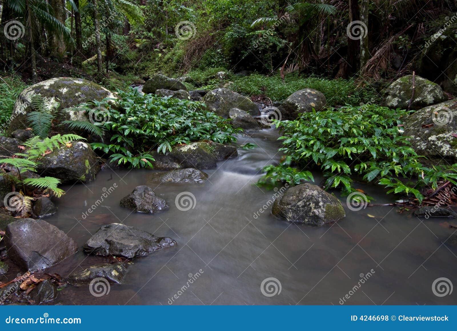 Regenwaldstrom