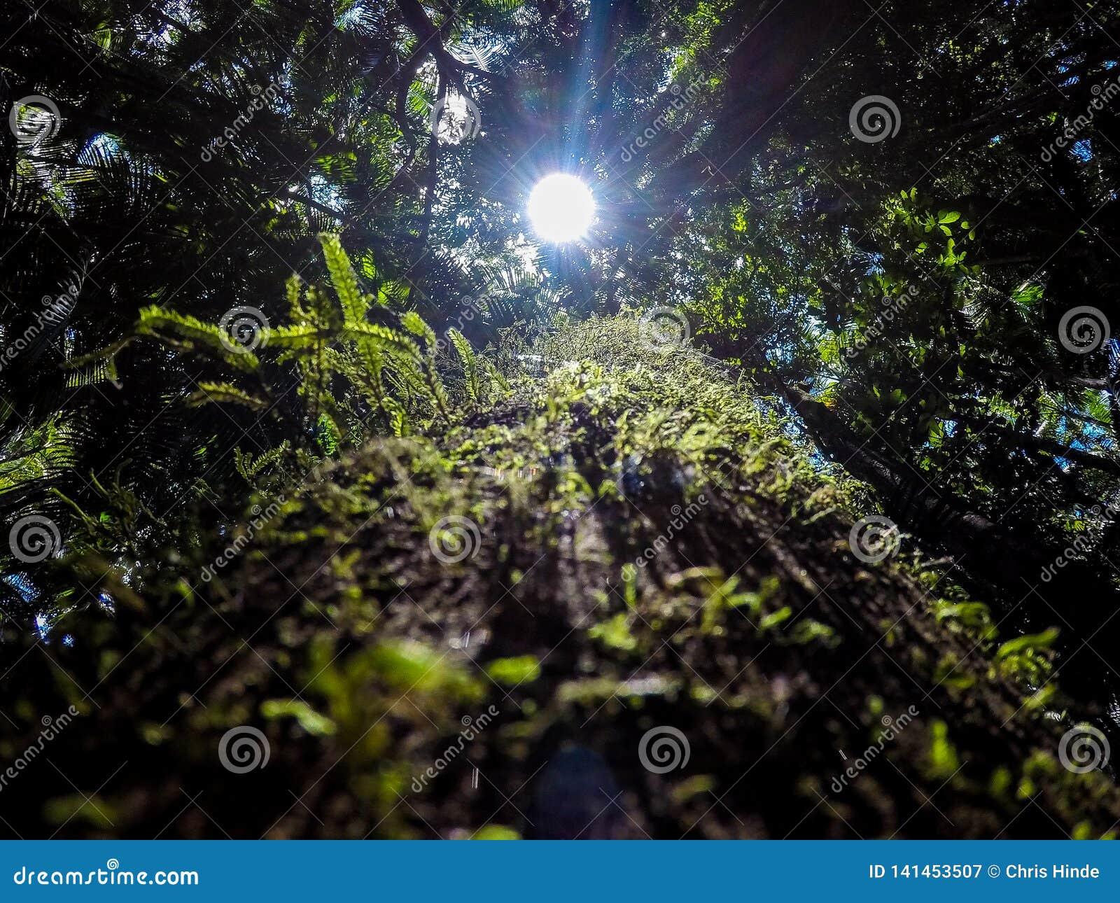 Regenwoud van de zon