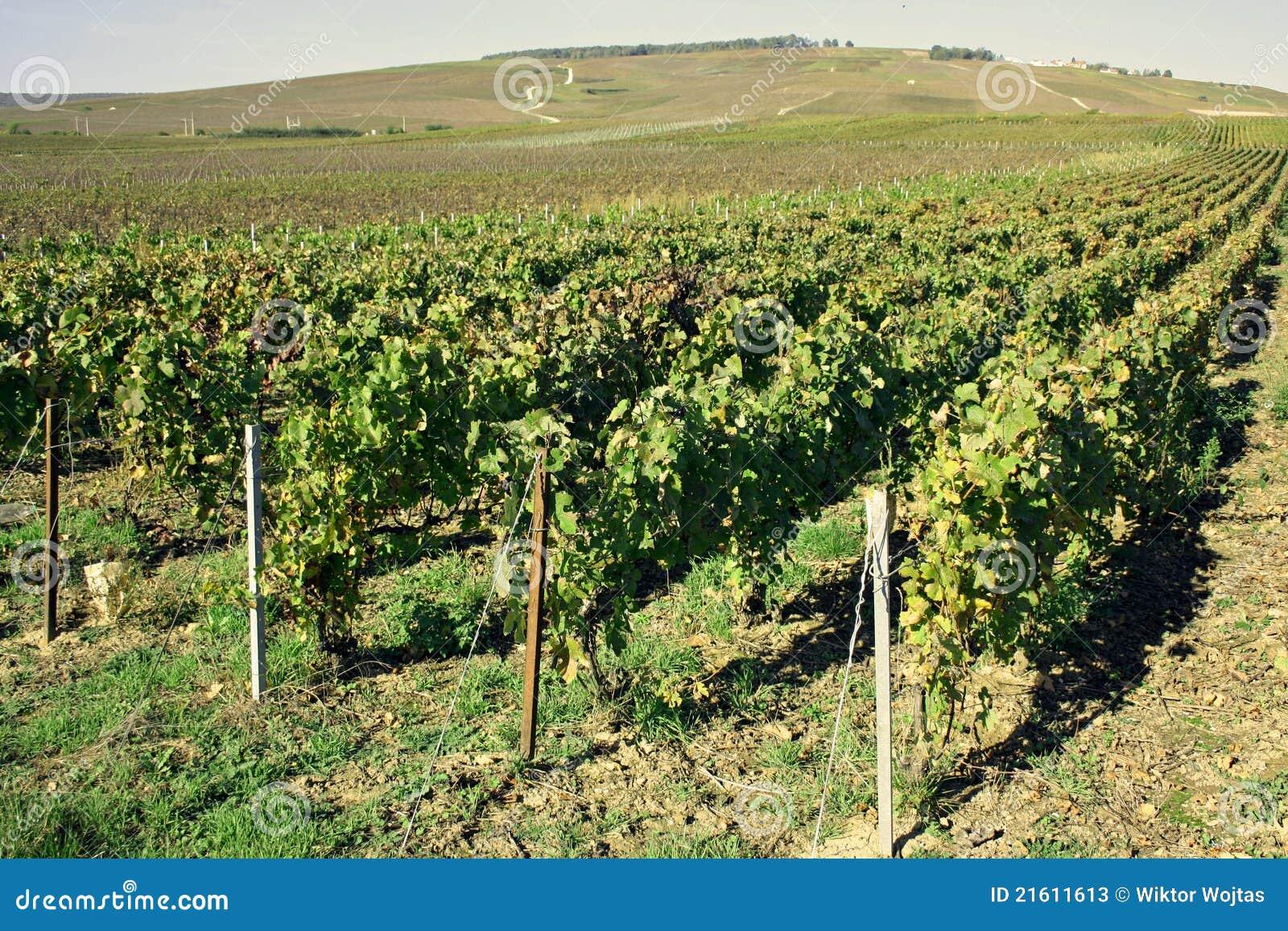 Região de Champagne em France