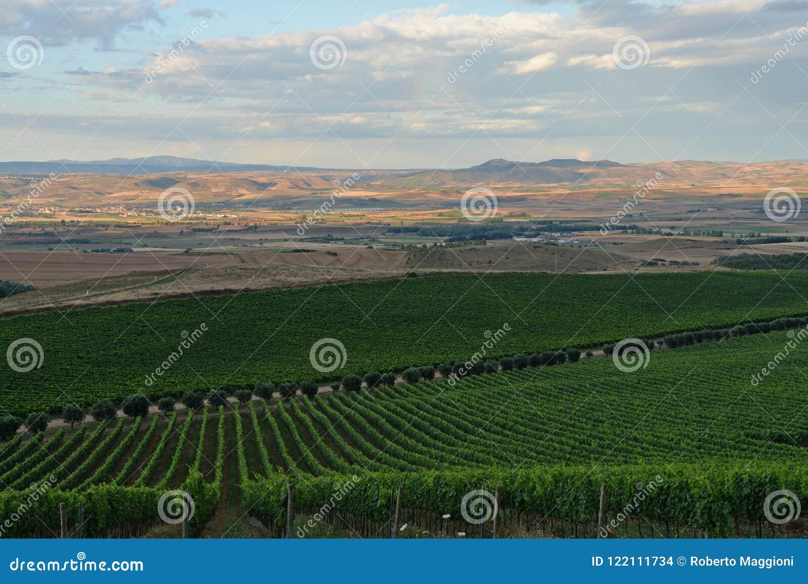 Región de Cerdeña, Italia Paisaje del viñedo