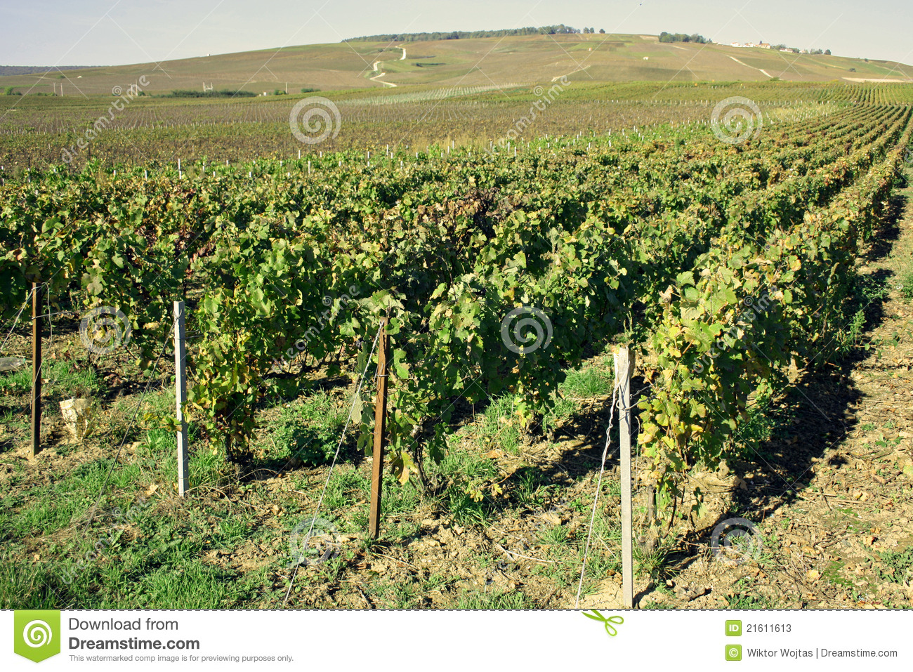 Region of champagne in france stock image image 21611613 for Champagne region in france