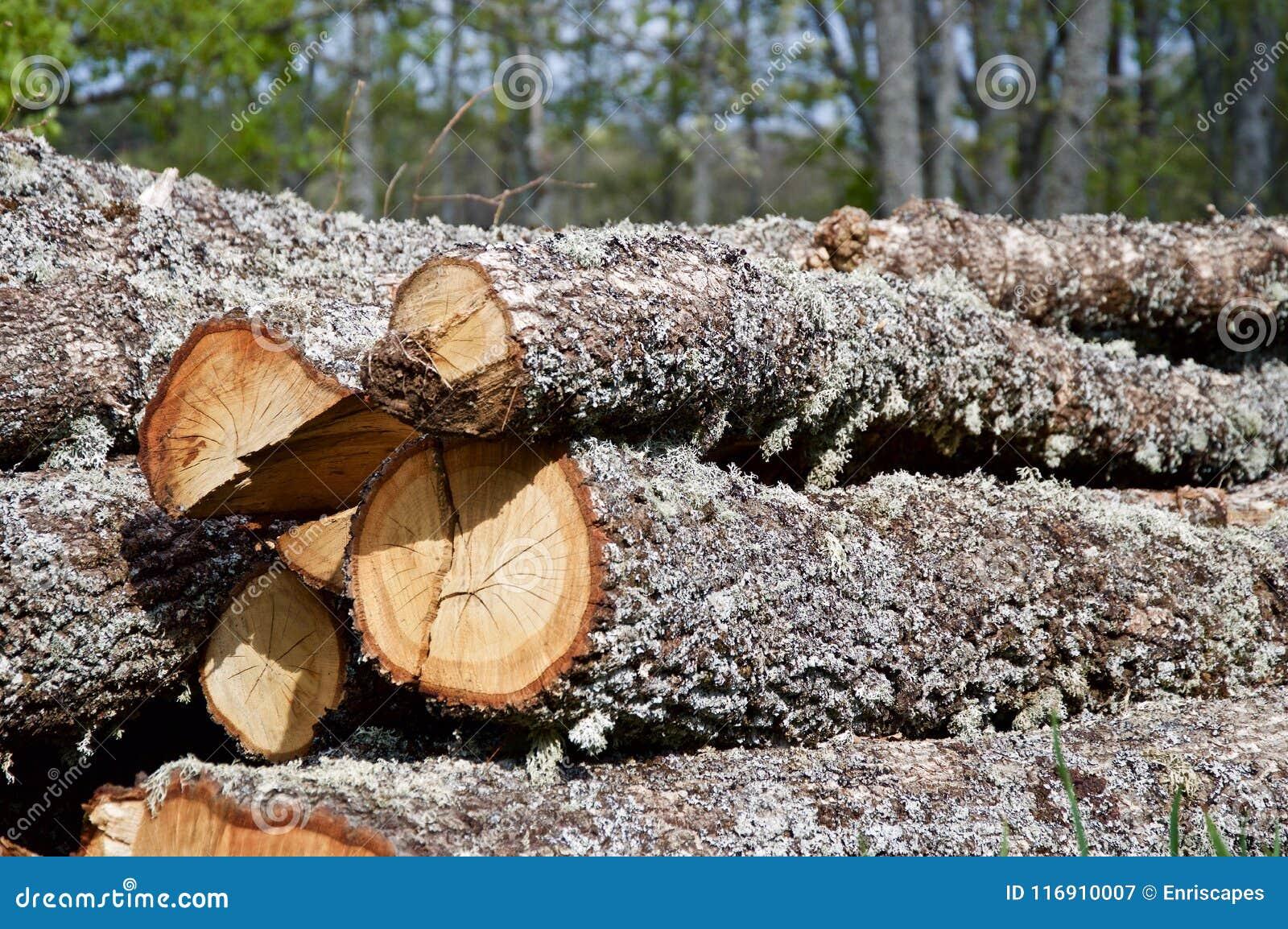 Registreren van eiken in het bos