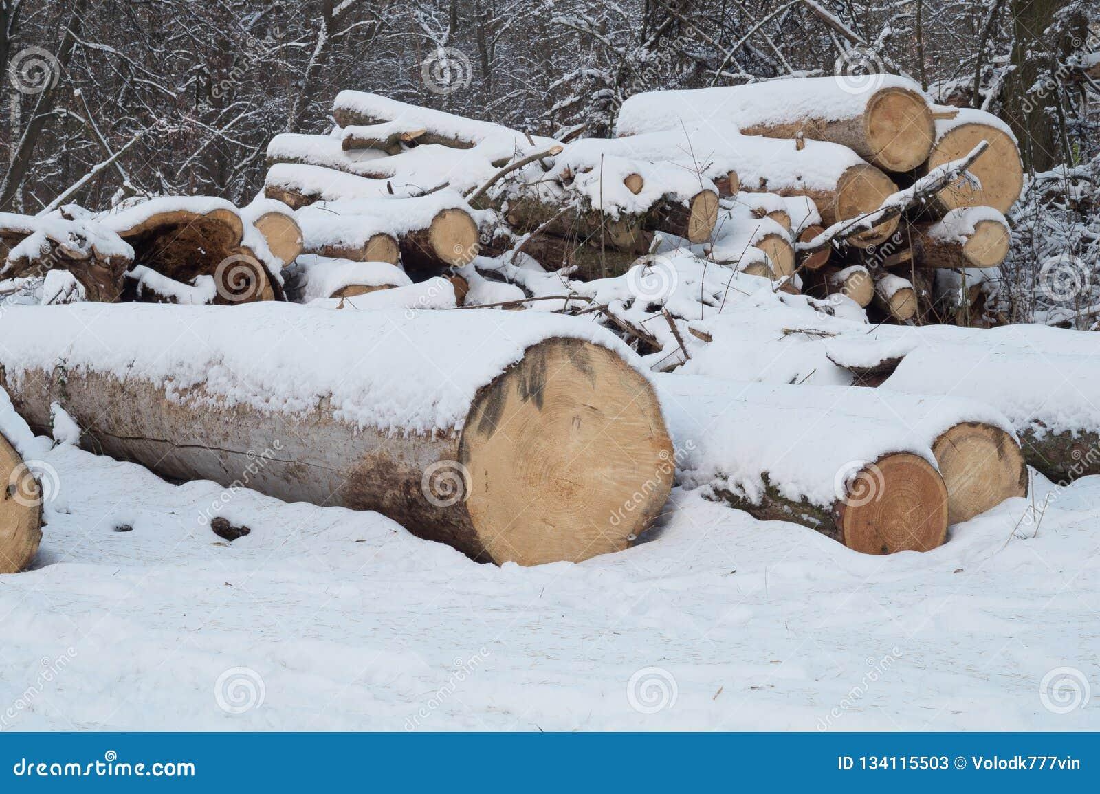 Registros Registros enormes sombreados por la nieve en el parque del invierno