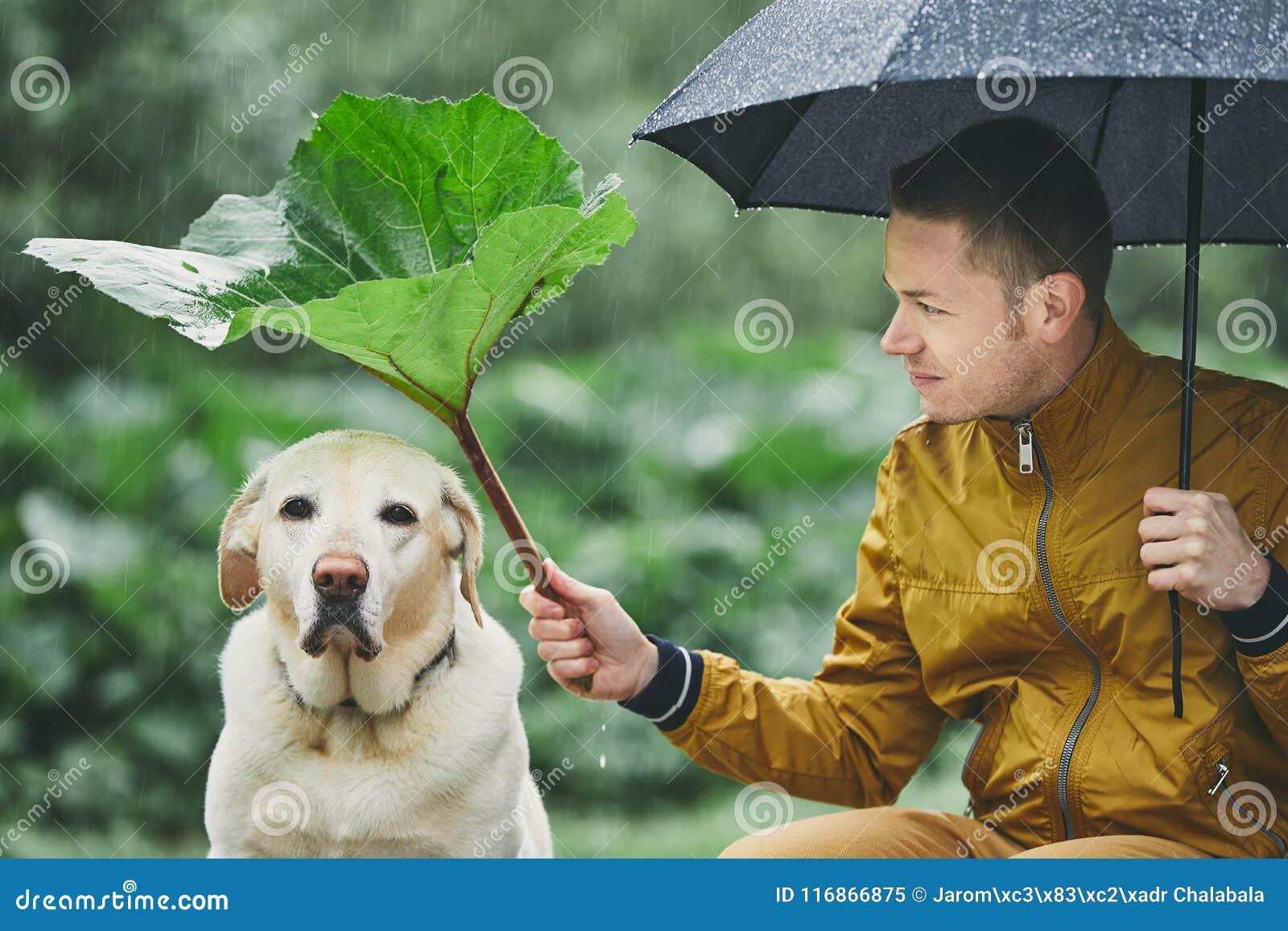 Regnig dag med hunden i natur