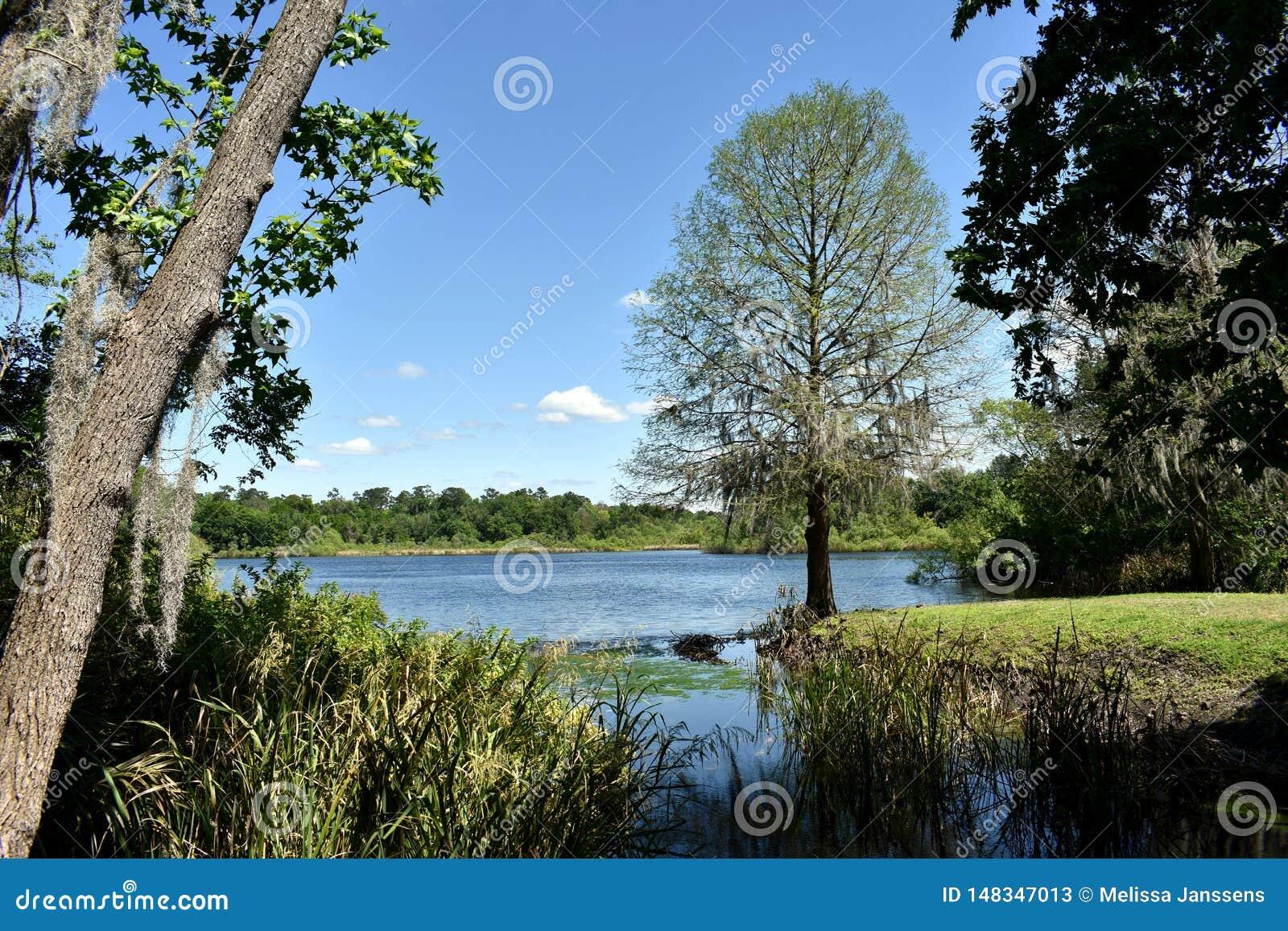 Regolazione idilliaca del libro di storia dell albero che trascura un lago vicino all universit? di Florida a Gainesville, Florid