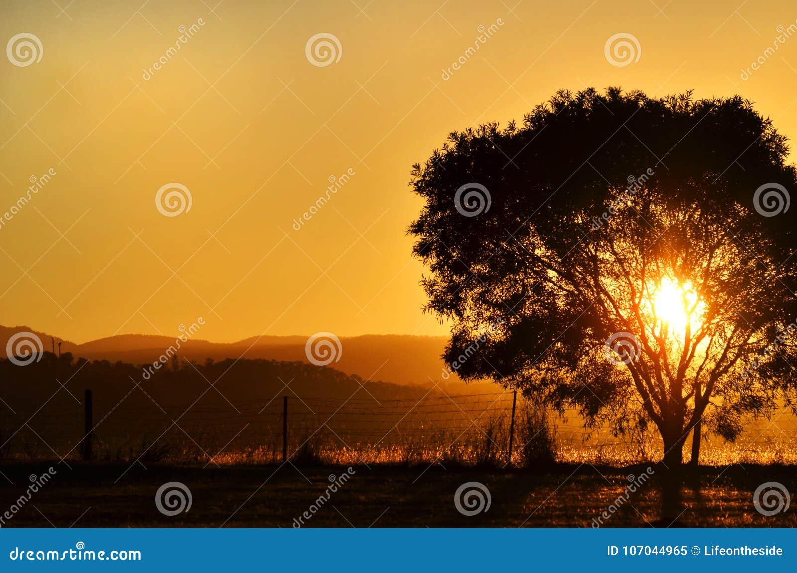 Regolazione sbalorditiva del sole di tramonto dietro l albero, montagne Australia rurale