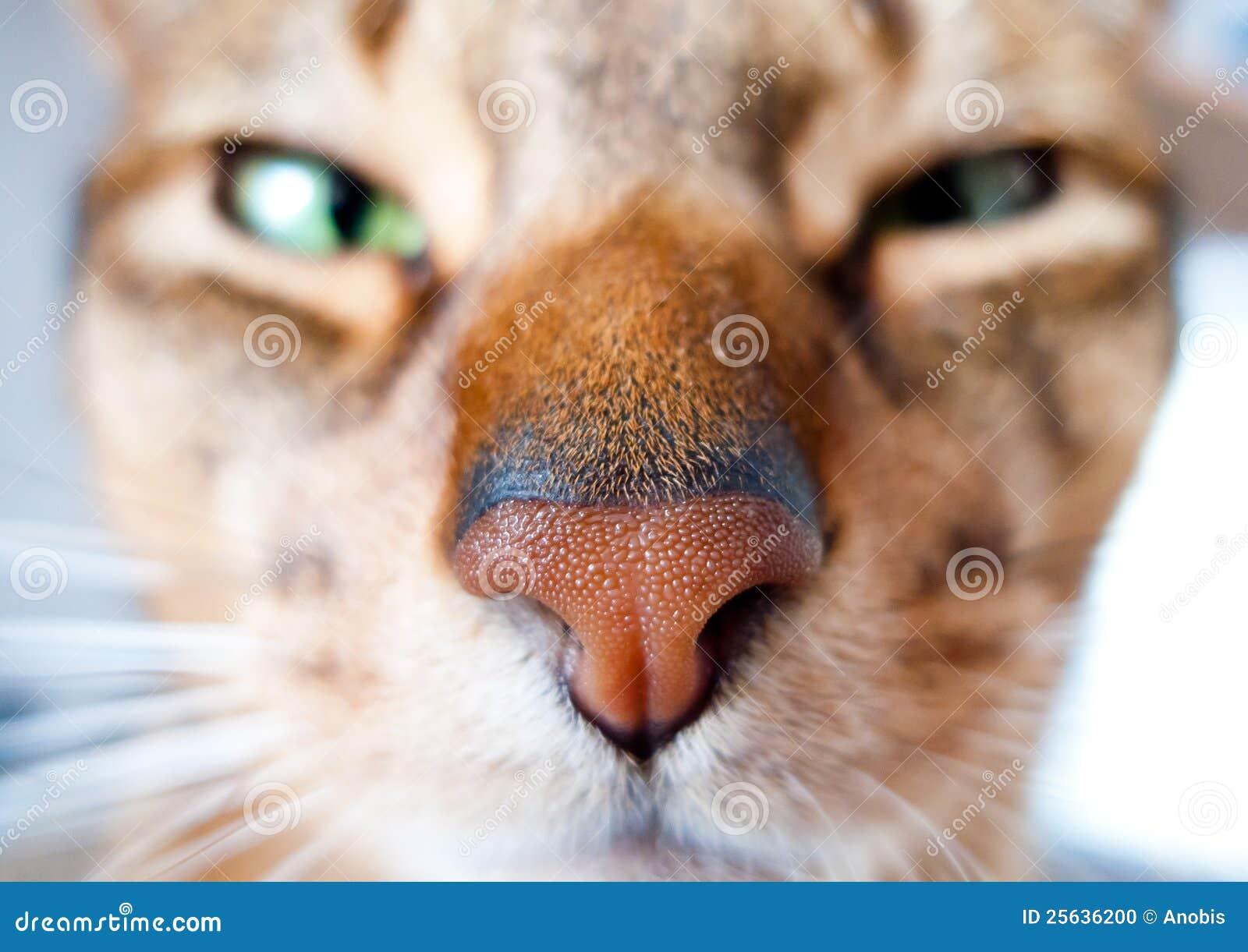 Rei dos gatos