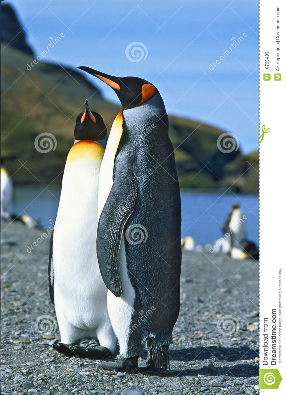 Rei pinguins