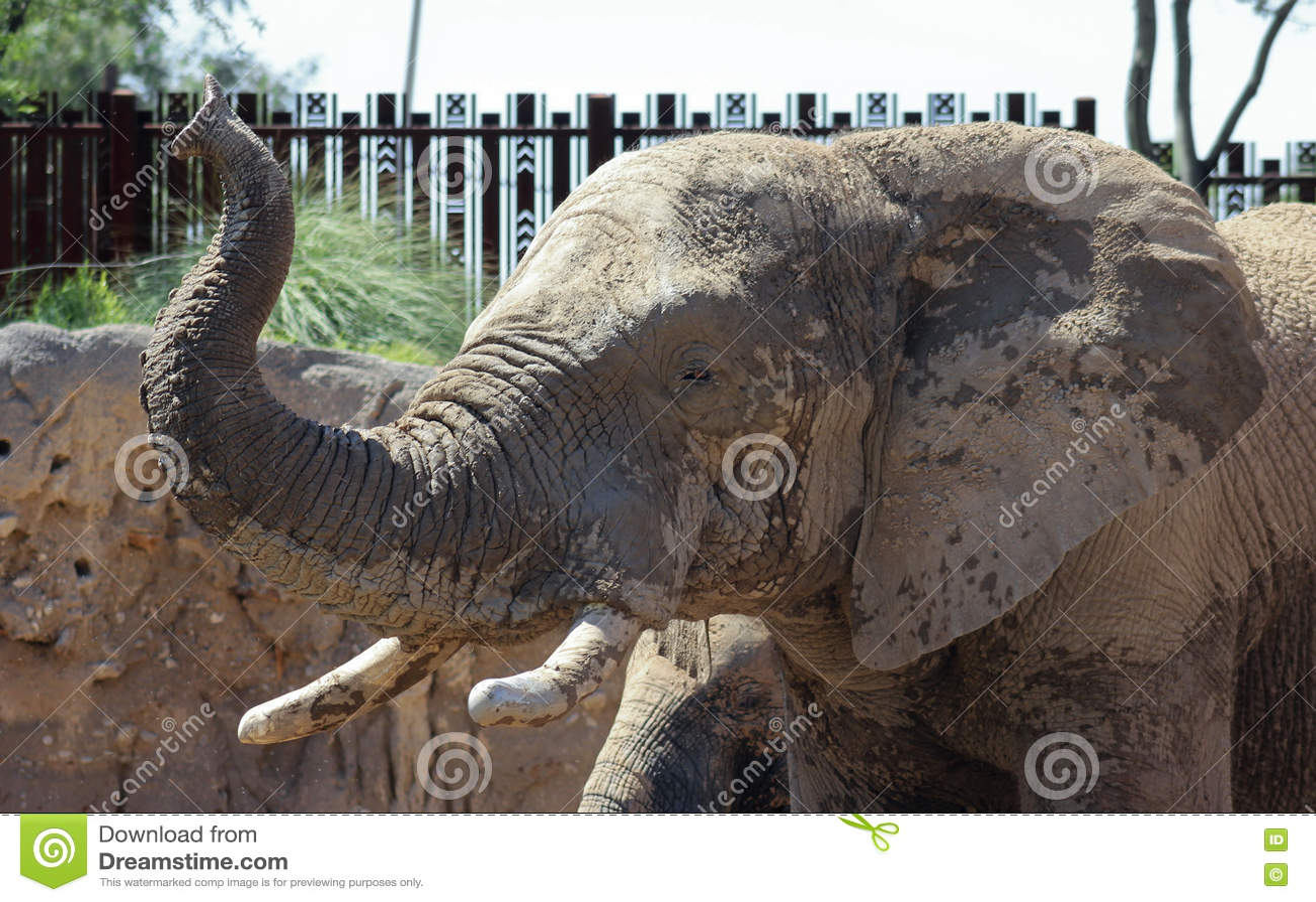Reid Park Zoo Elephant, Tucson, Arizona