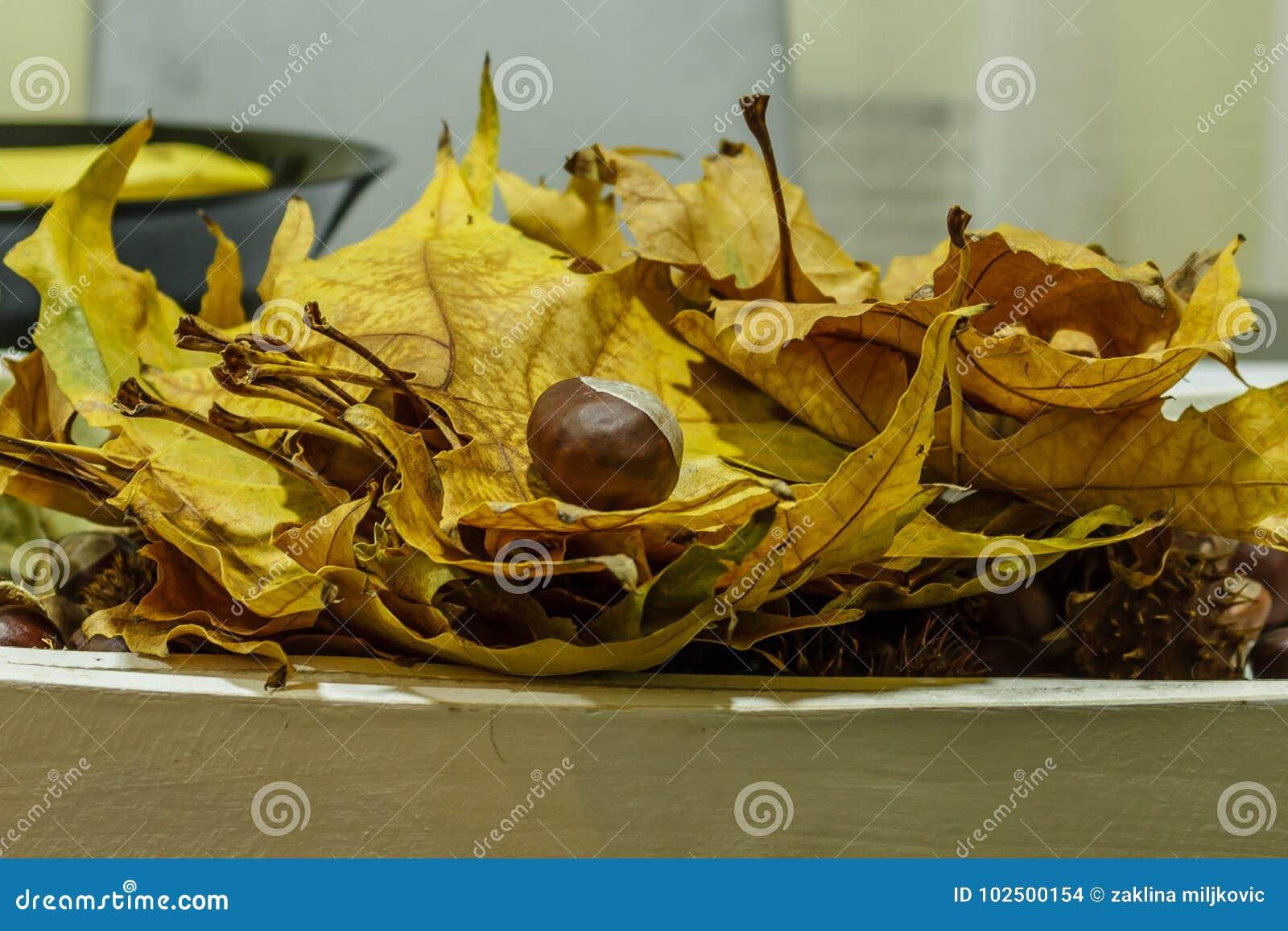 Reife Kastanie auf einem Stapel von goldenen Blättern