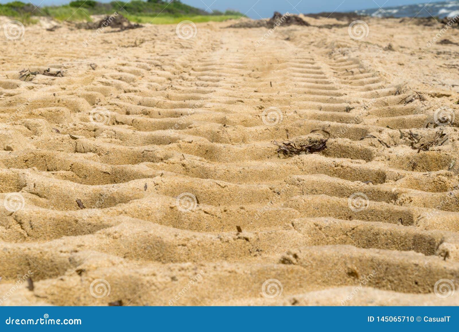 Reifenbahnen bilden ein Muster auf einem sandigen Strand