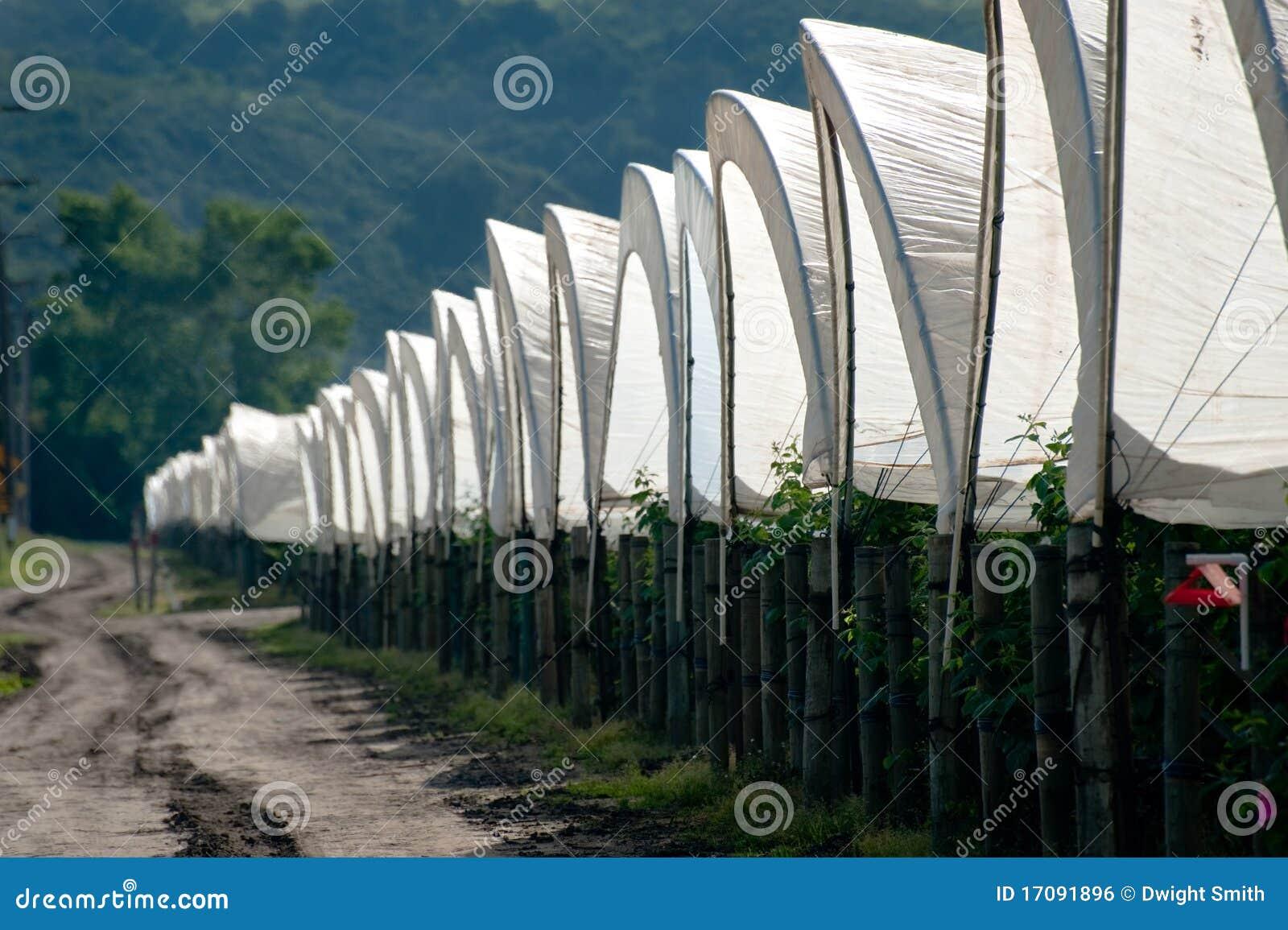 Reihe der Zelte