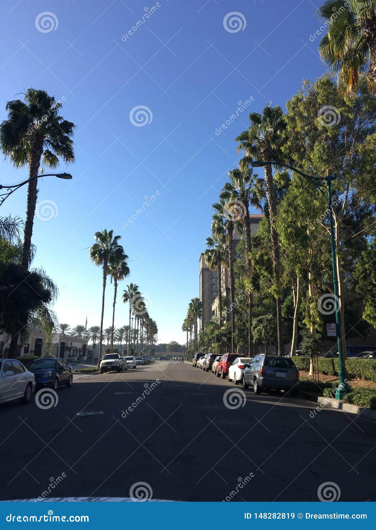 Reihen von Palmen in Las Angeles, Kalifornien