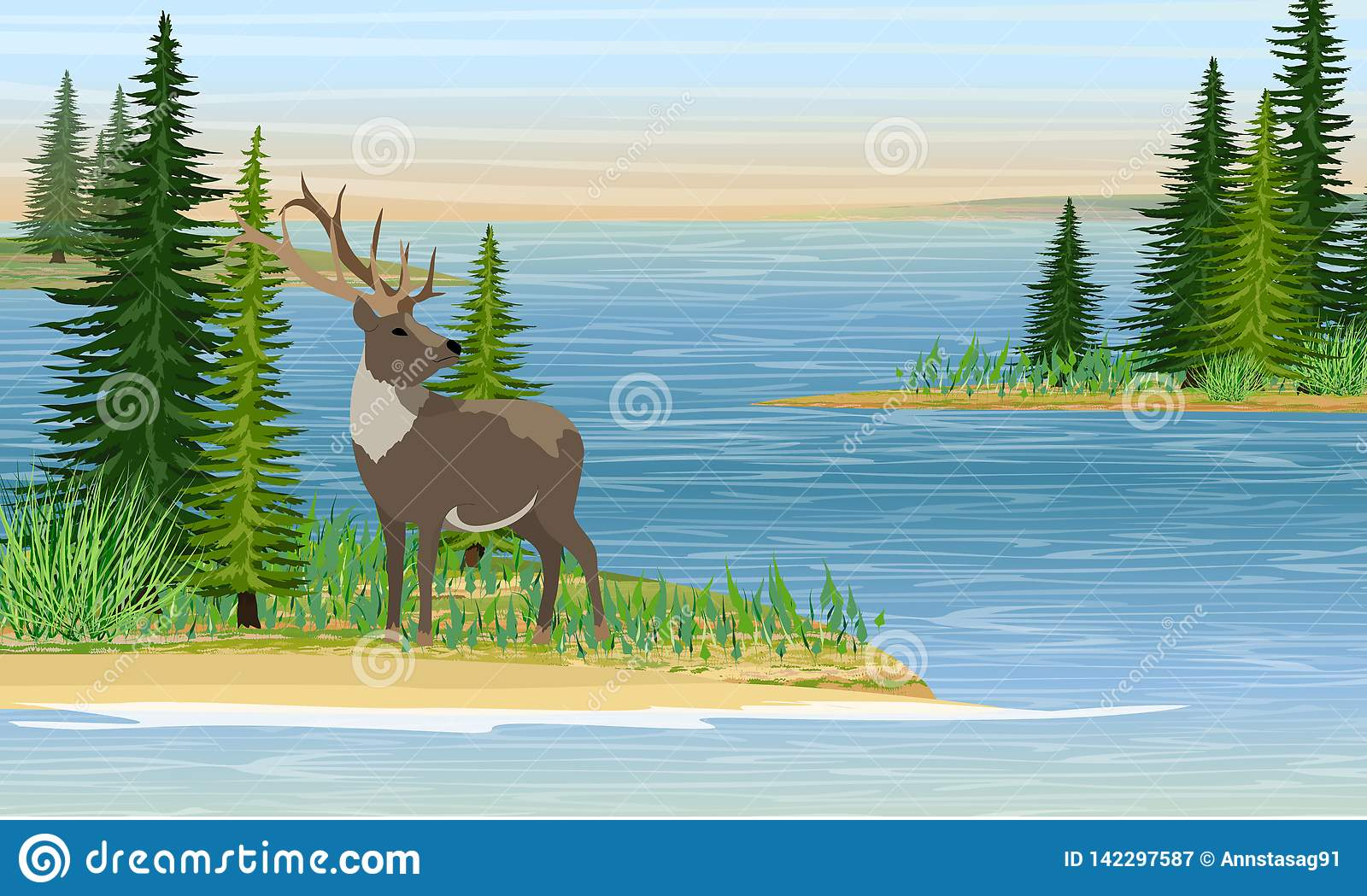 Reindeer with branched horns on the sea or a large lake. Sandy beach with grass and fir trees