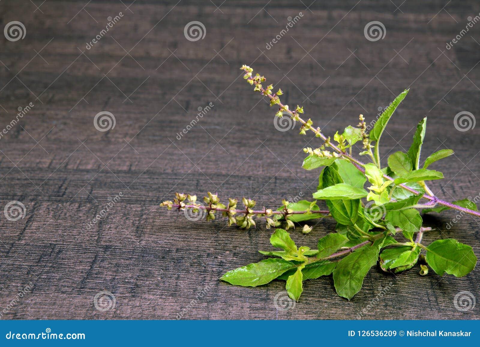 Reine sainte de Basil ou de Tulsi des herbes et du mortier en bois