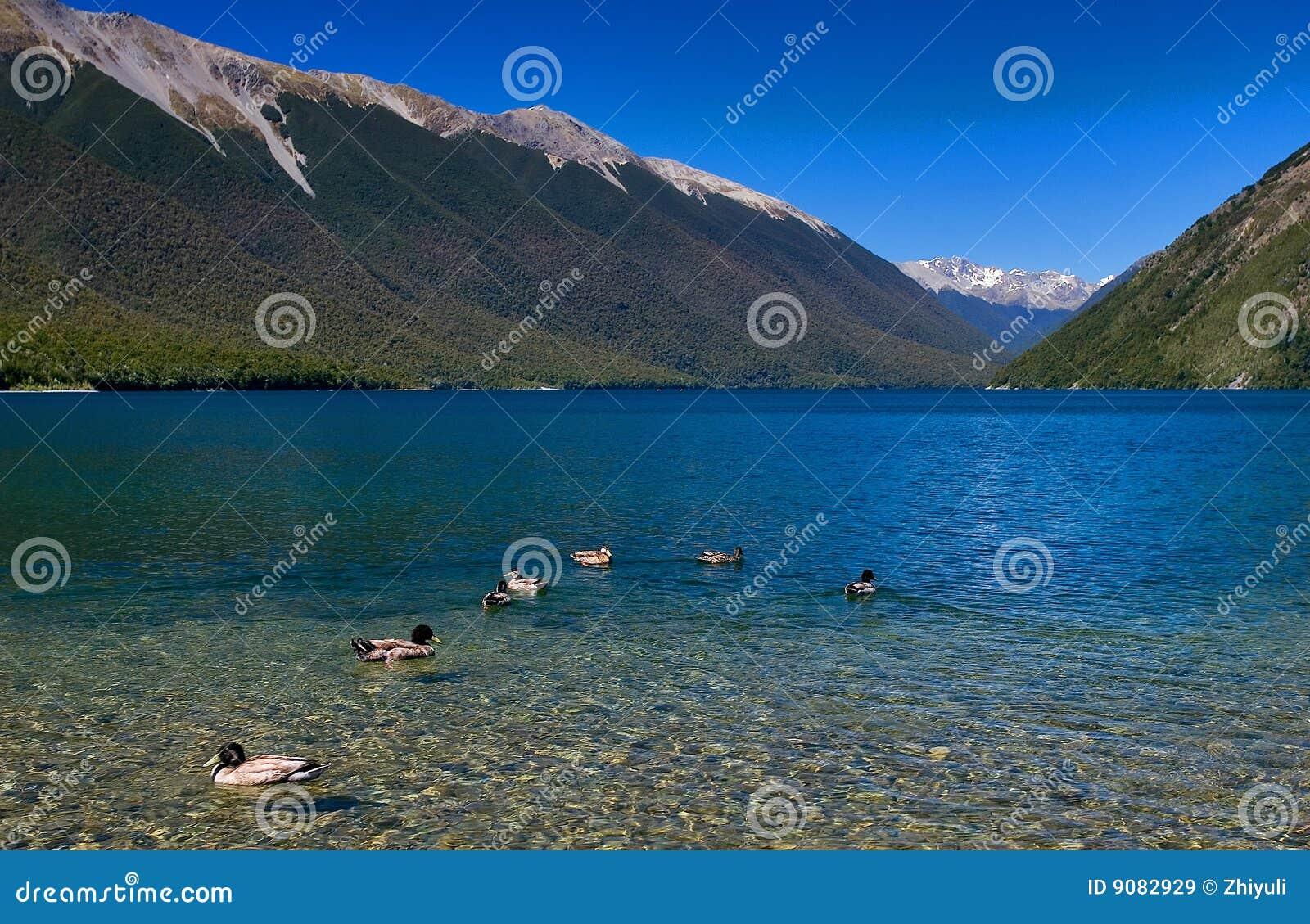 Reiner See Rotoiti