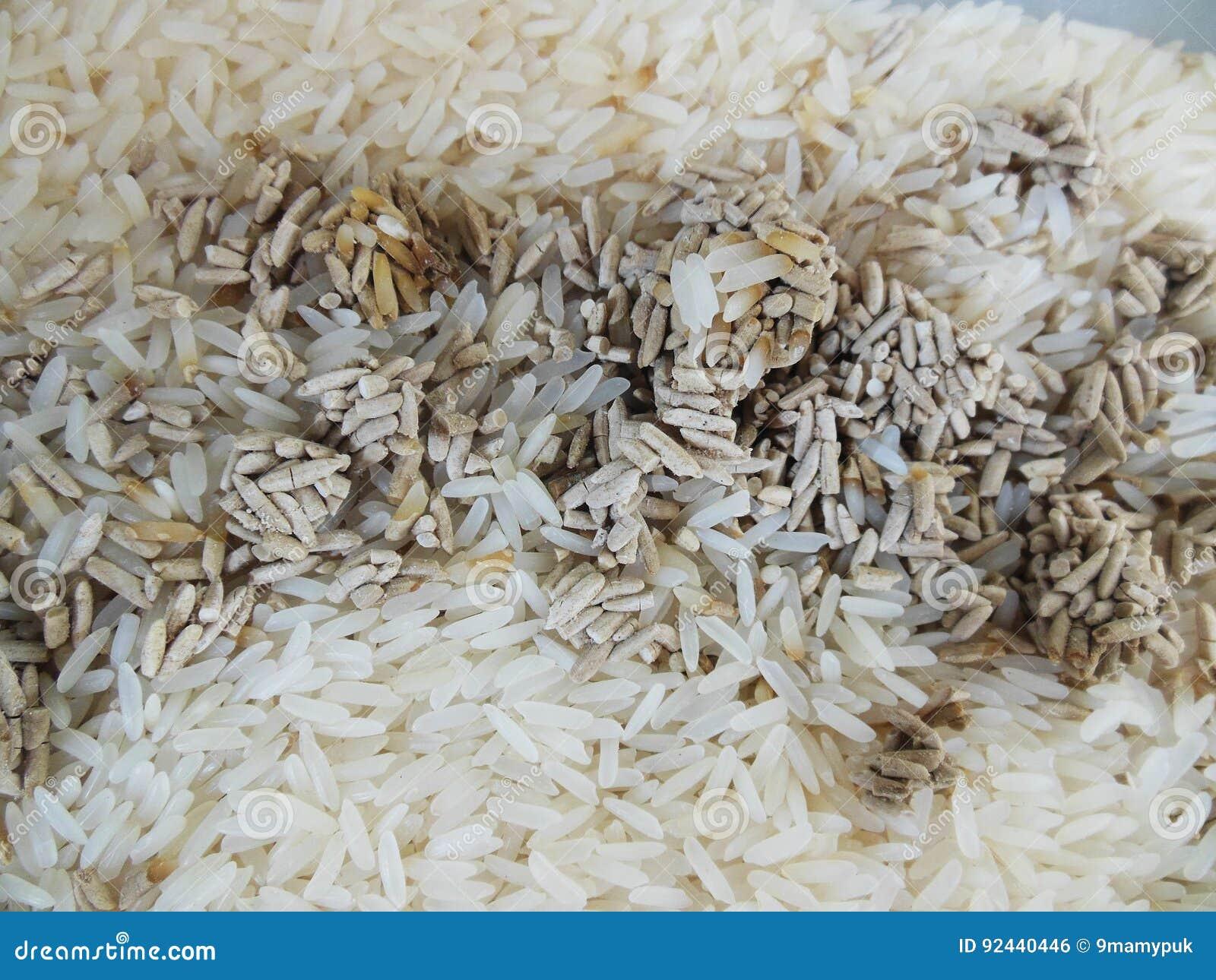 Reis ist pilzartig