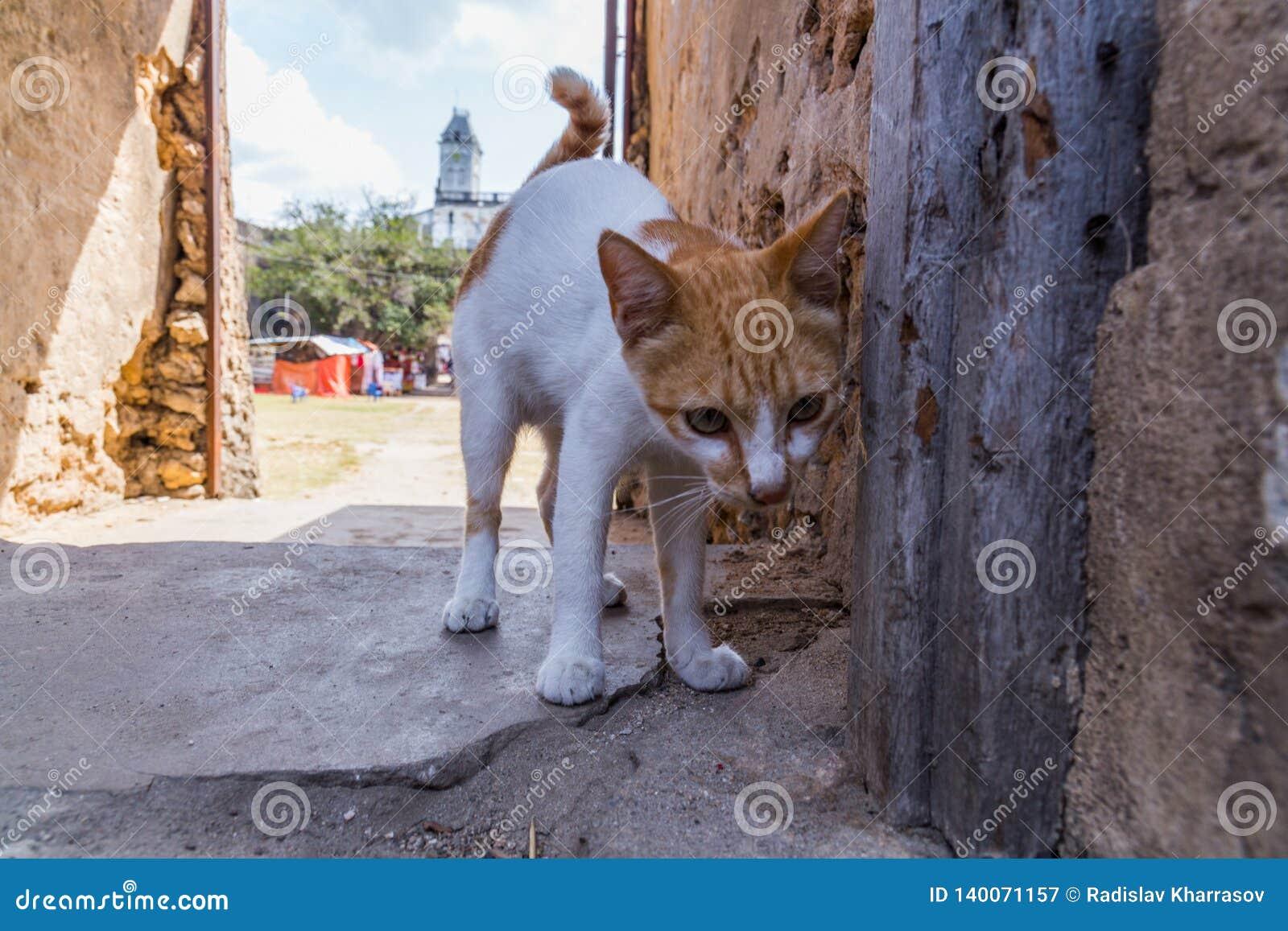 Reise um Afrika Wenig Katze auf der Straße der Steinstadt