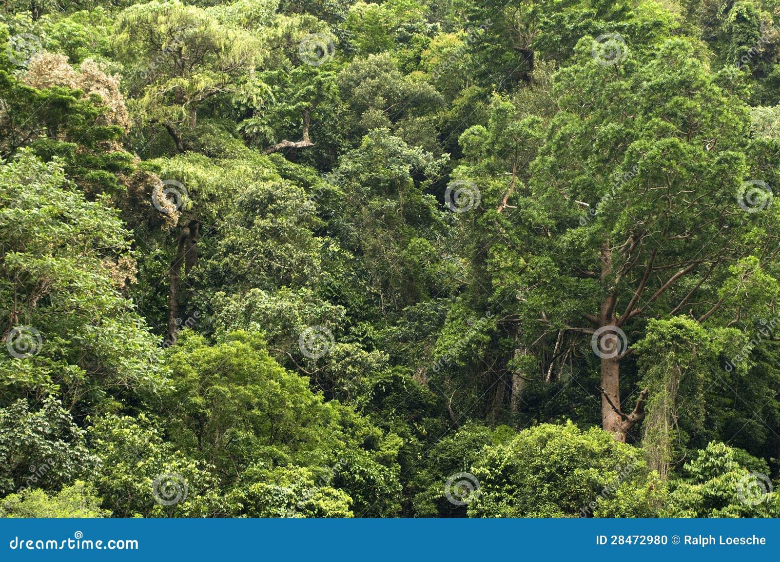 Reisen der Barron Schlucht-Nationalpark