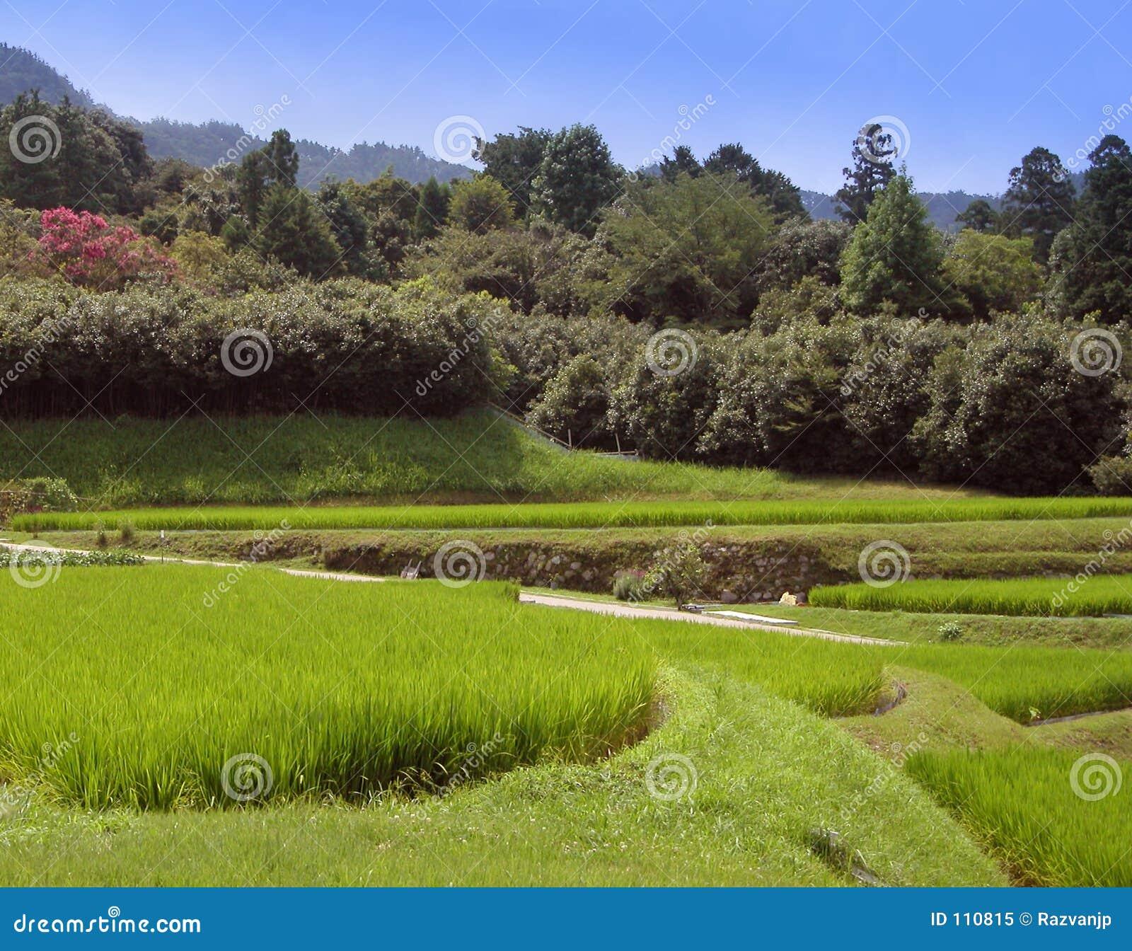Reiskultur