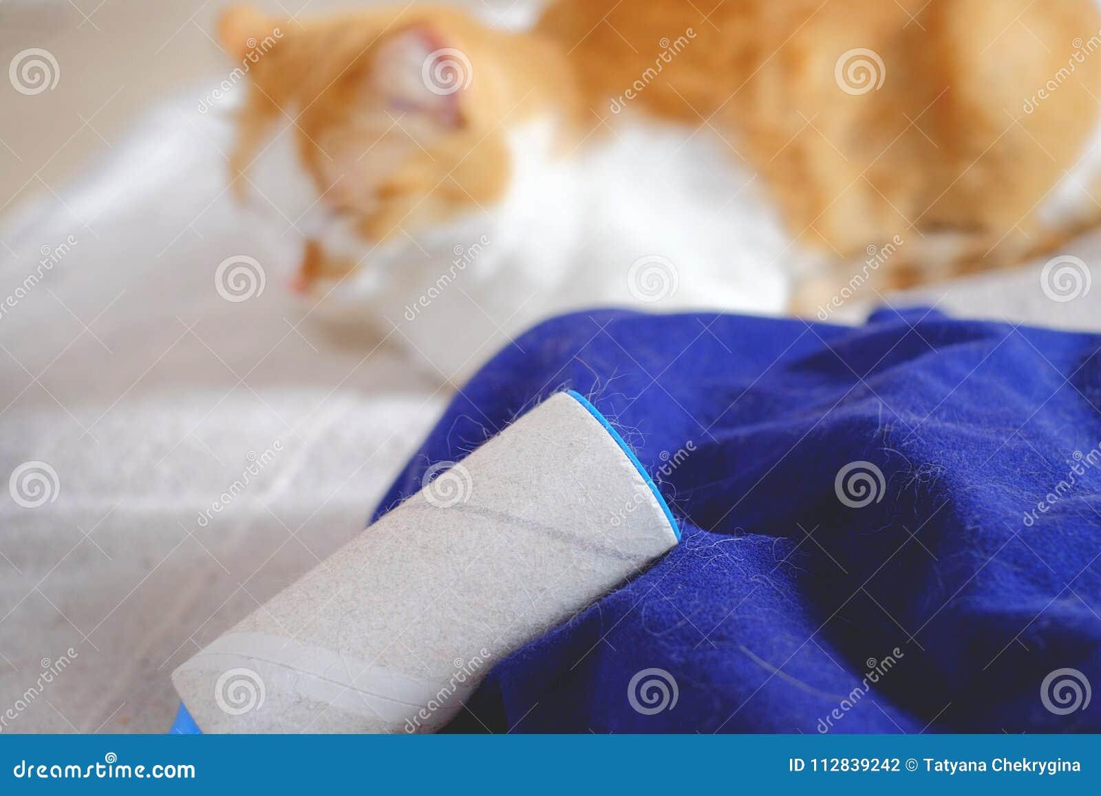 Rejet De Chat, Veste Bleue Complètement Des Cheveux Animaux