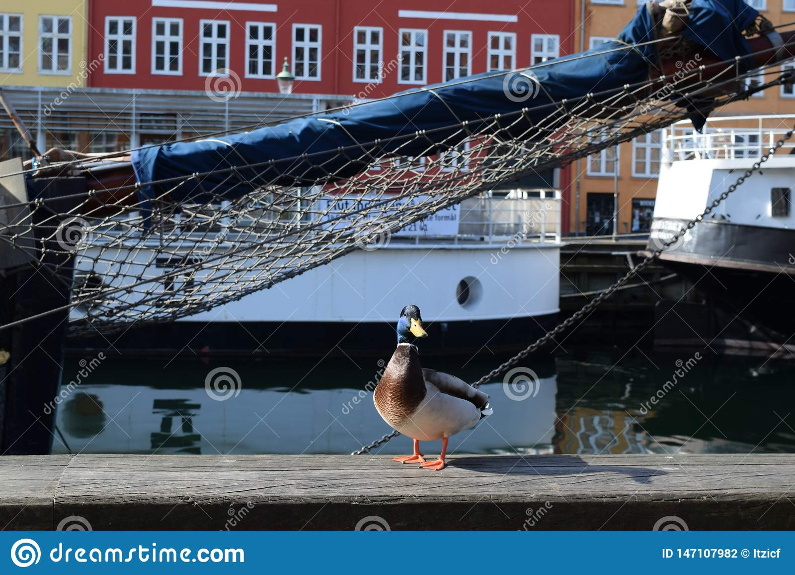 Rekonesansowy nyhavn kana? w Kopenhaga mie?cie Dani