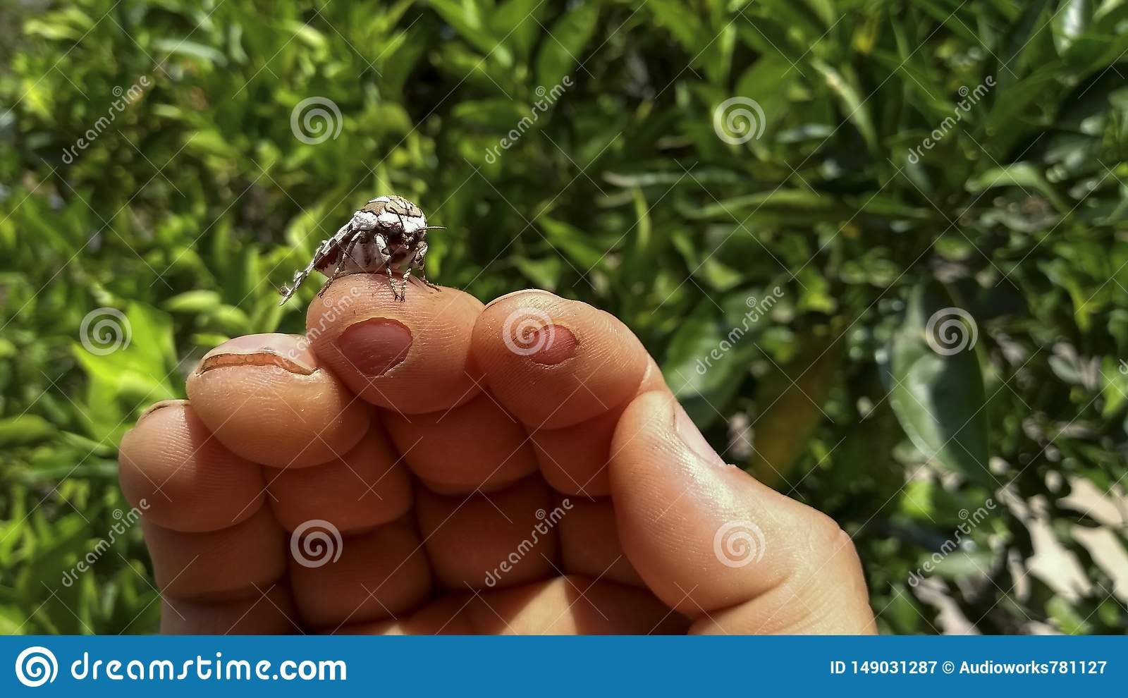 The relationship between human and insect beautiful