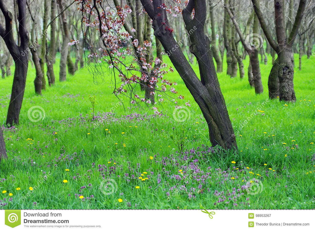 Download Magic Place. Green Nature. Relaxation And Tranquility In The Forest. Spring Landscape Stock Image - Image of environment, natural: 98953267