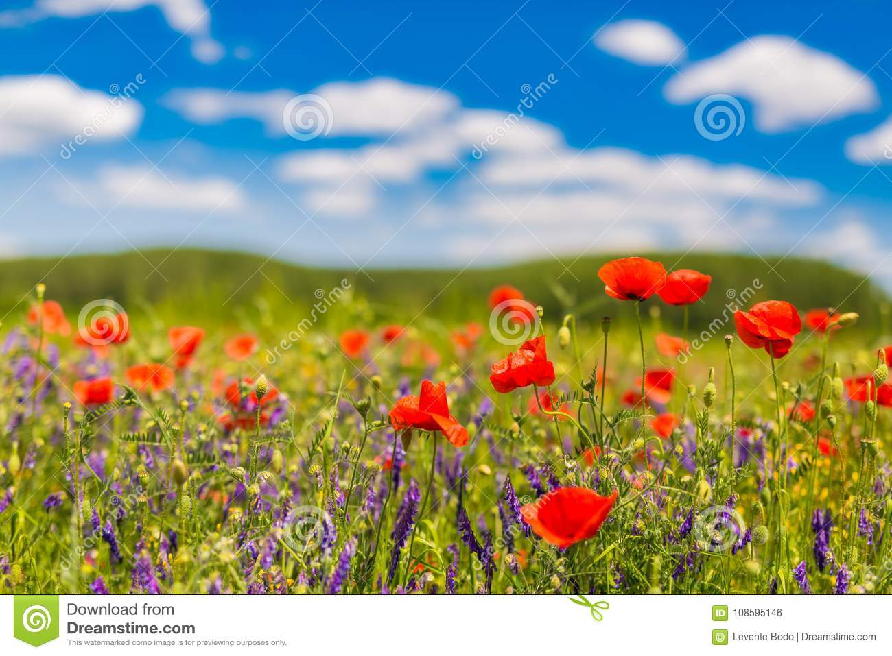Summer Poppy Flowers And Blue Sky Landscape Background Beautiful