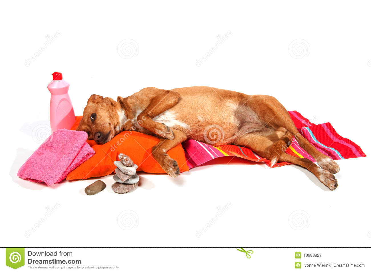 Relaxing Dog Royalty Free Stock Photography Image 13983827