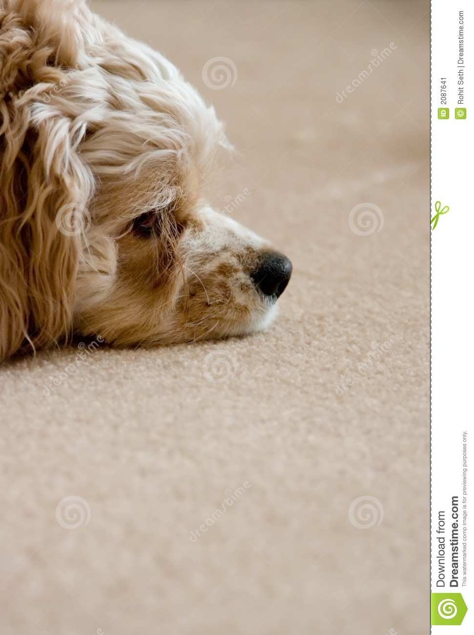 Relaxing Dog Stock Image - Image: 2087641 Relaxing Dogs