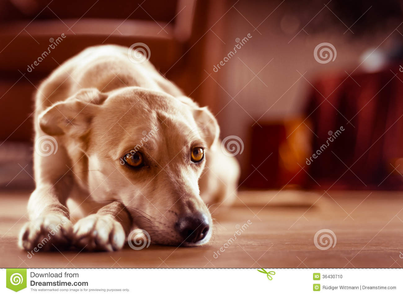 Relaxing Dog Stock Photo - Image: 36430710 Relaxing Dogs