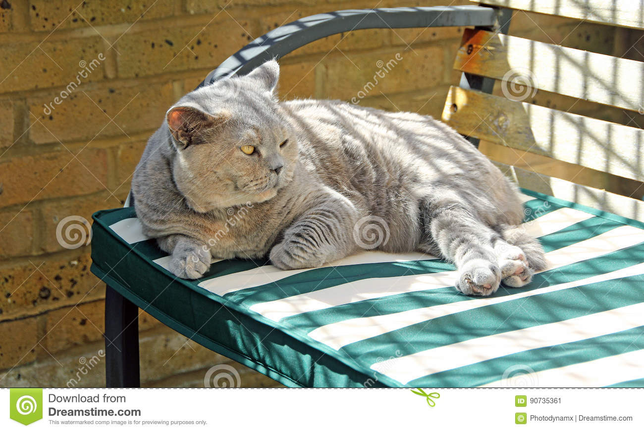 Swell Relaxing Pedigree Cat On Bench Stock Image Image Of Inzonedesignstudio Interior Chair Design Inzonedesignstudiocom